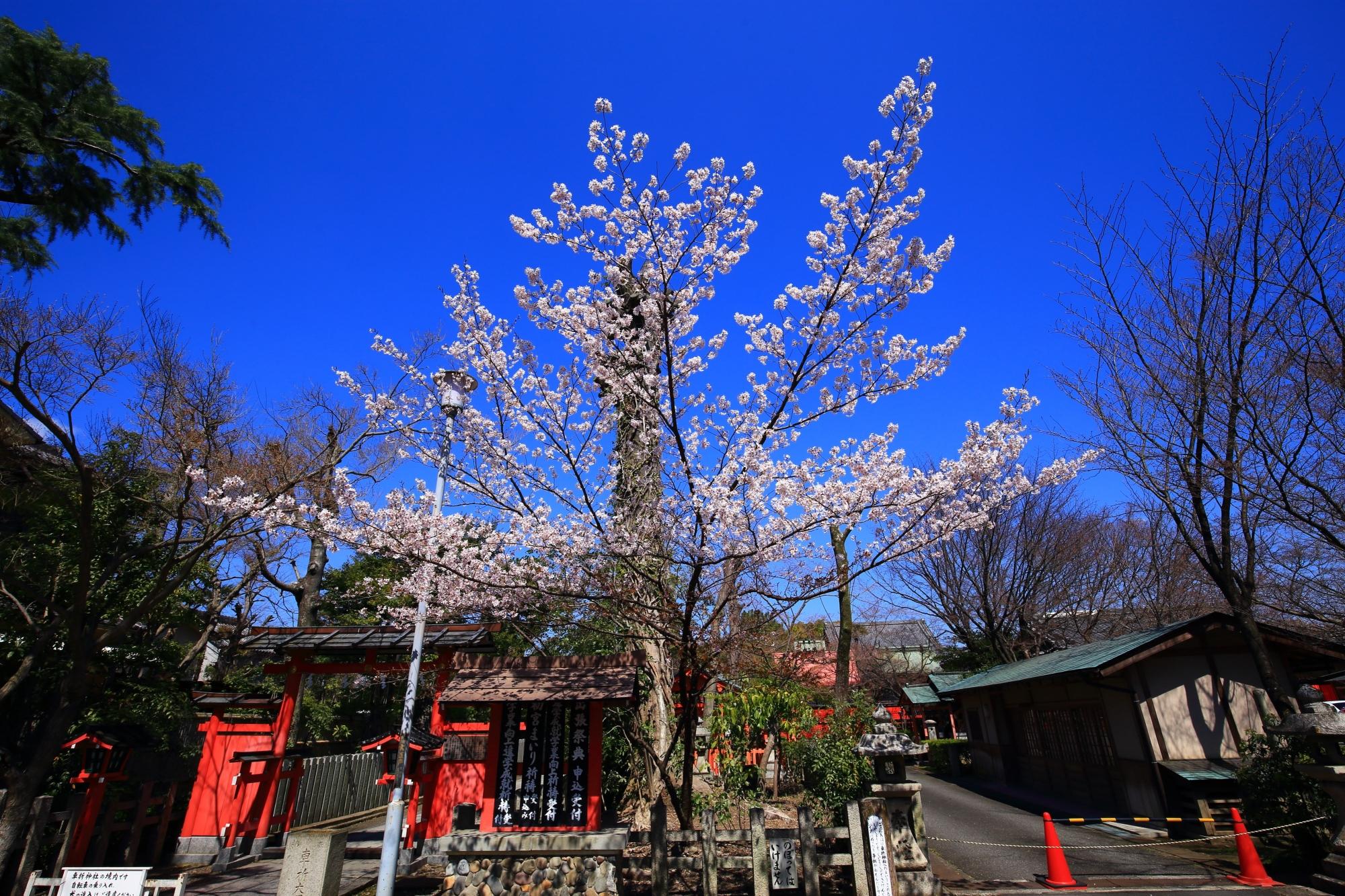 車折神社の他の早咲きの桜