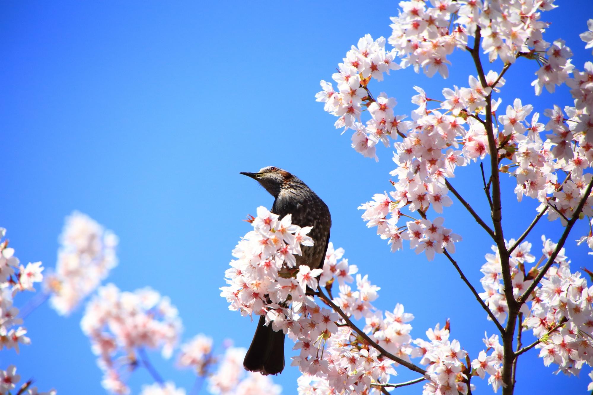 車折神社に漂う長閑な春の雰囲気