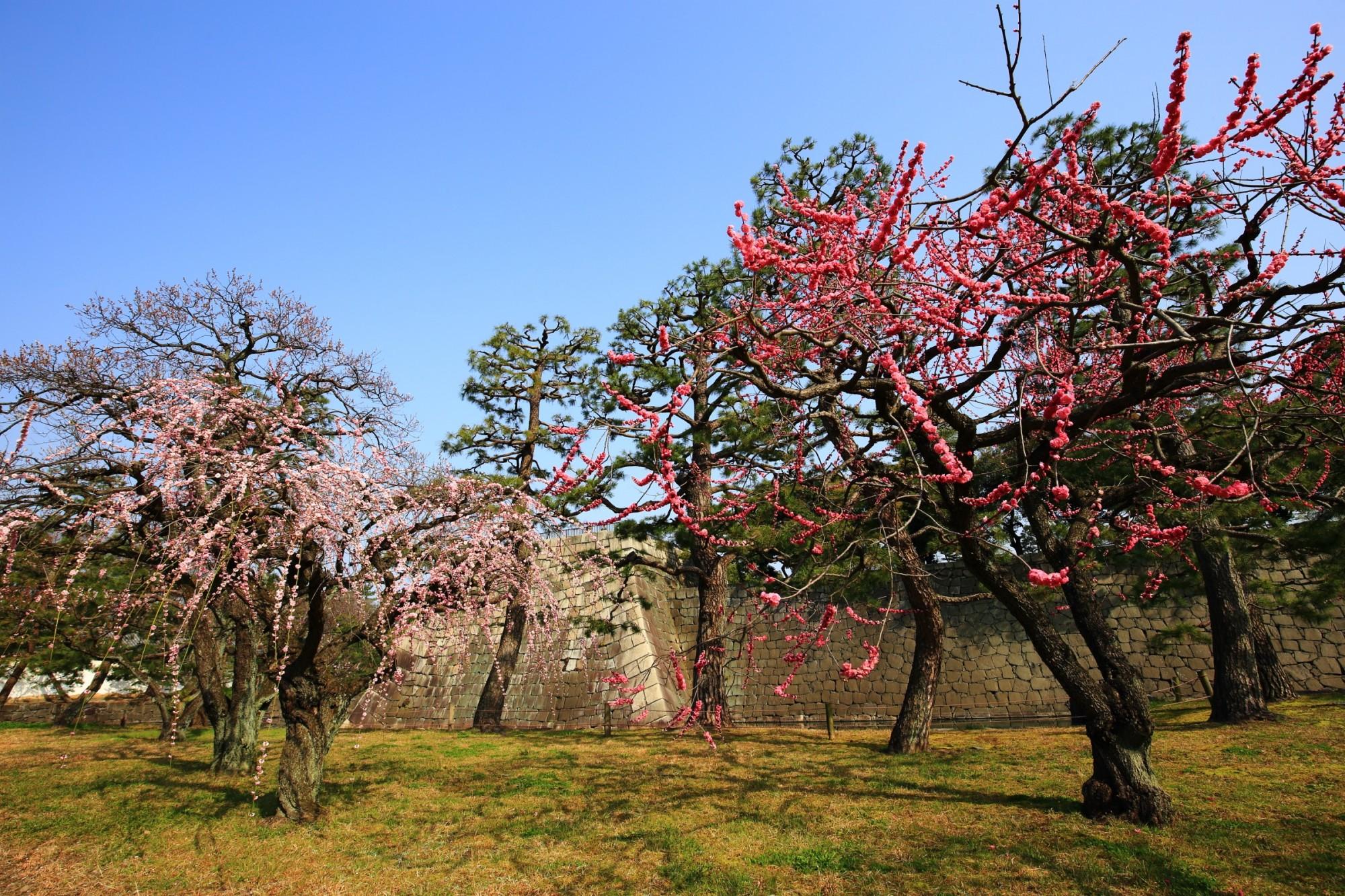 華やかに彩られた梅の名所