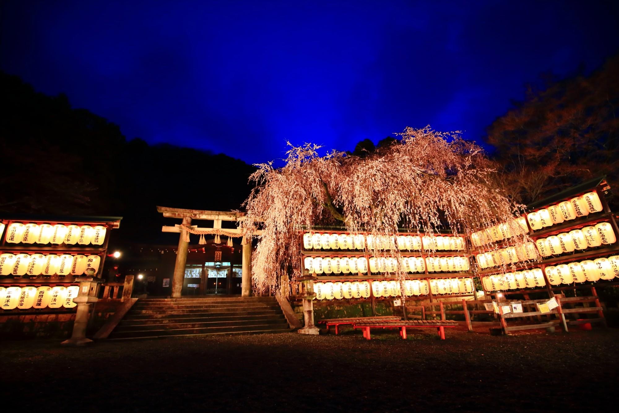 大石神社 しだれ桜 幻想的な夜桜ライトアップ