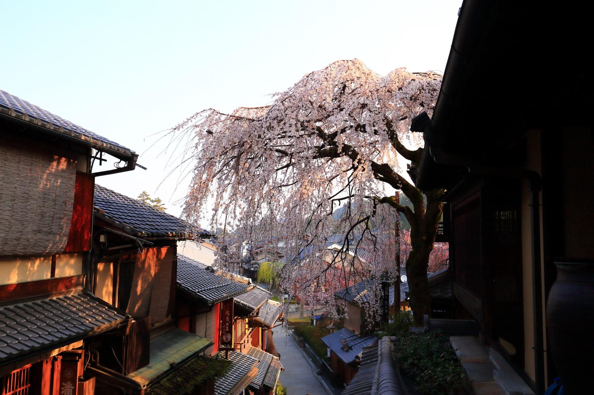 産寧坂(三年坂) 桜 情緒ある街並みとしだれ桜