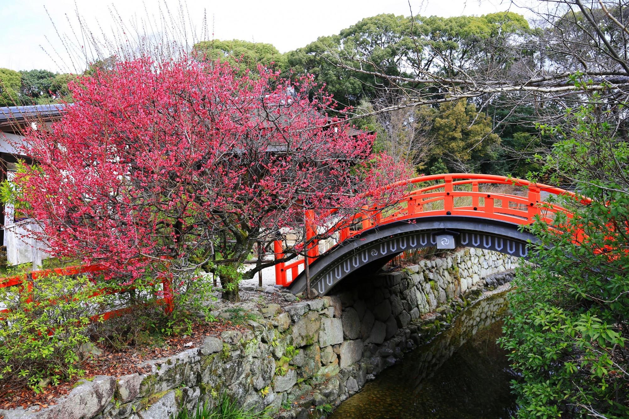 下鴨神社 光琳の梅 まさに絵になる梅の風景