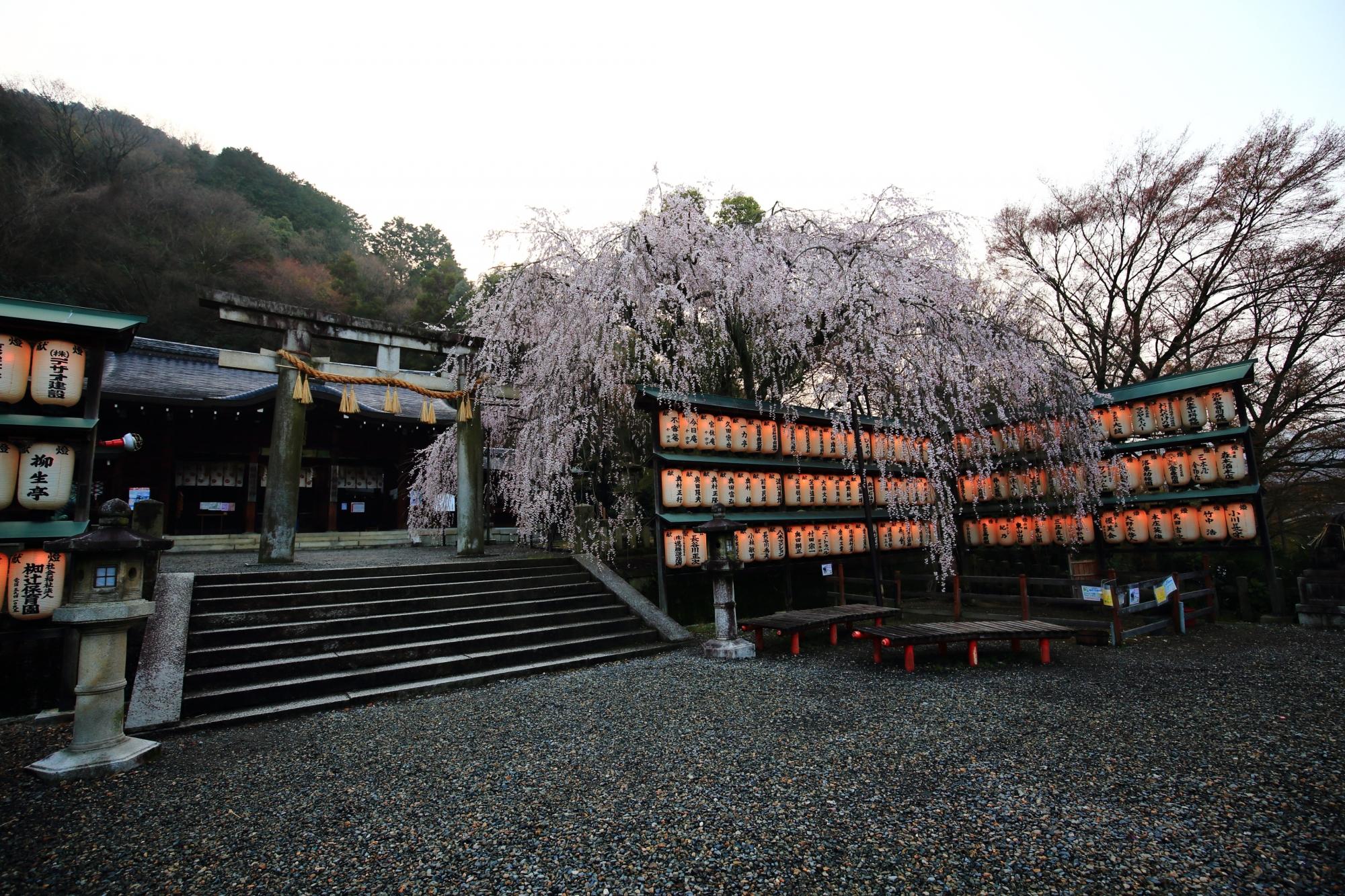 大石桜(しだれ桜)