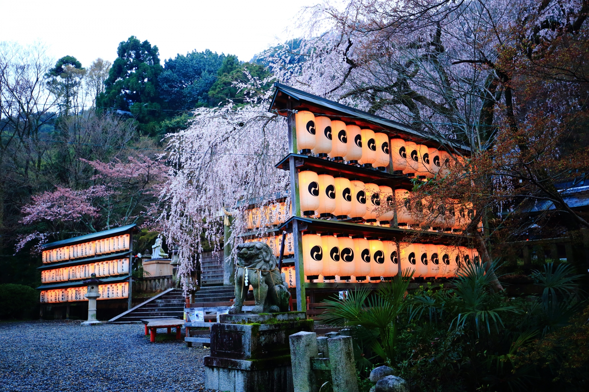 駒形提灯の裏側から眺めた大石桜