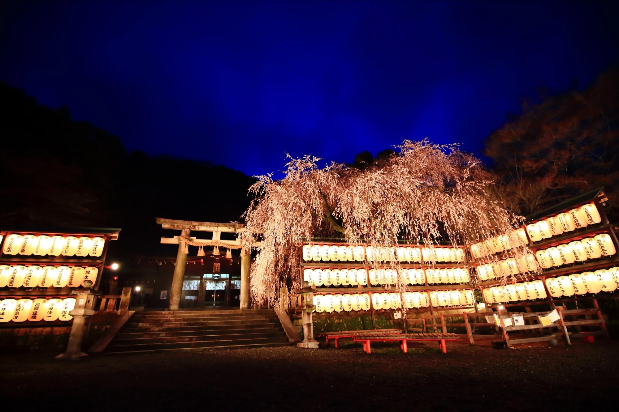 見事な大石桜のライトアップ