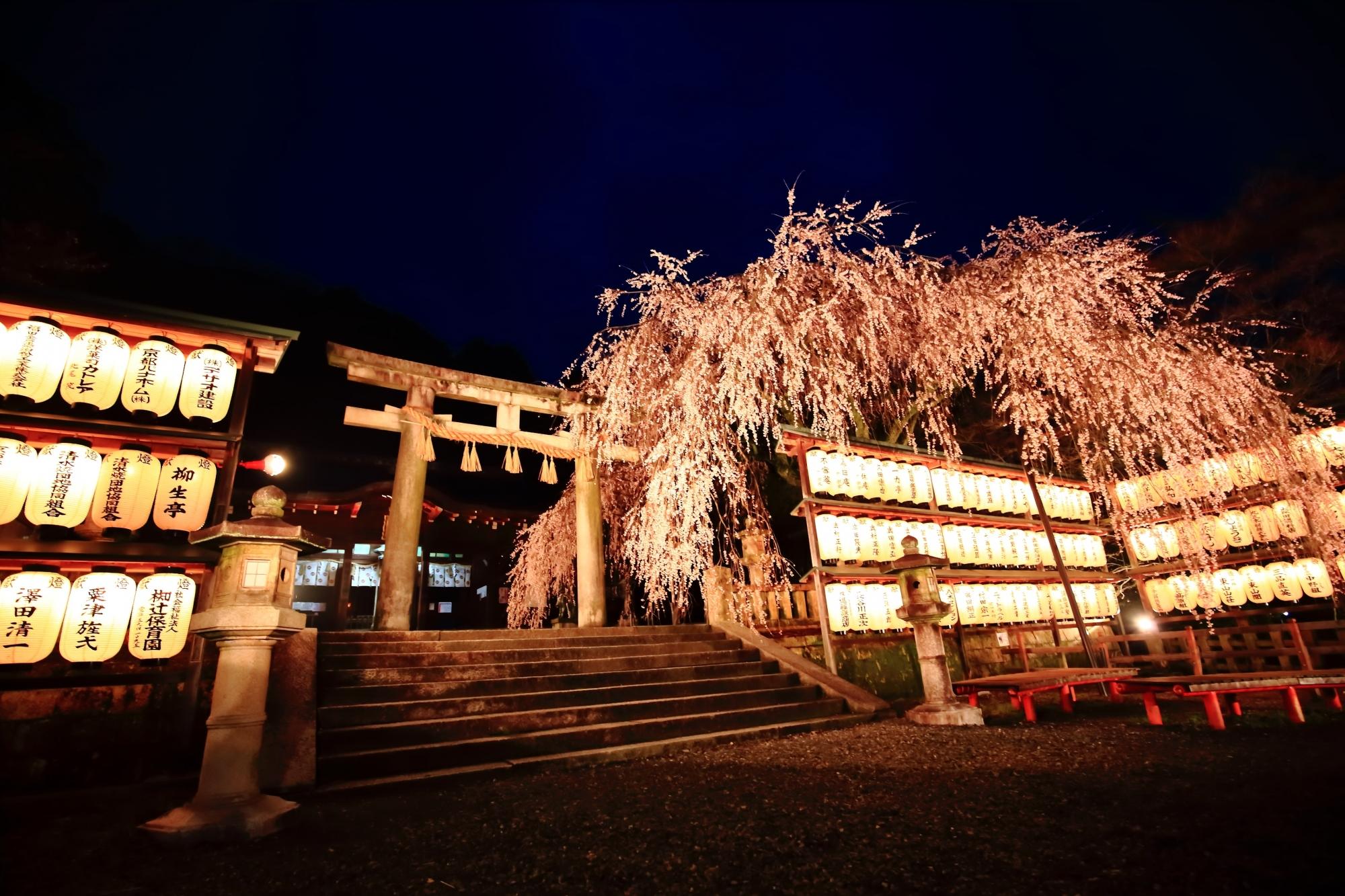 素晴らしい大石神社の夜桜ライトアップと情景