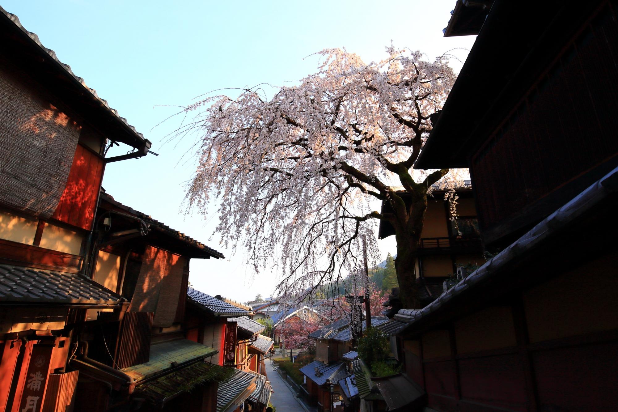 古風で情緒ある街並みと一緒に楽しめる桜