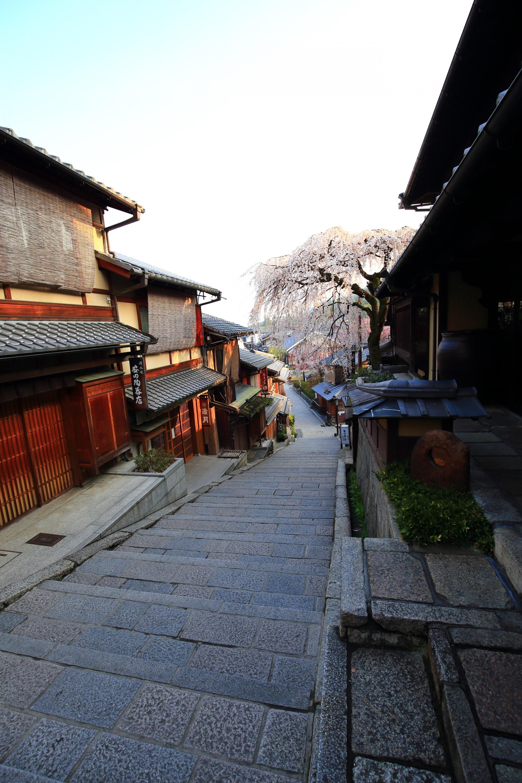 上から眺めた産寧坂(三年坂)のしだれ桜