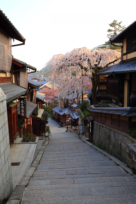 産寧坂の素晴らしいしだれ桜と情緒ある街並み