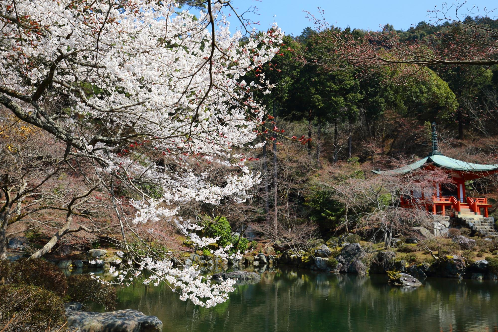 醍醐寺の弁天堂と華やかな桜