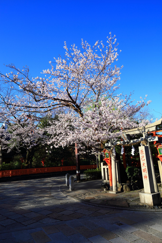 祇園白川の素晴らしい桜と春の情景