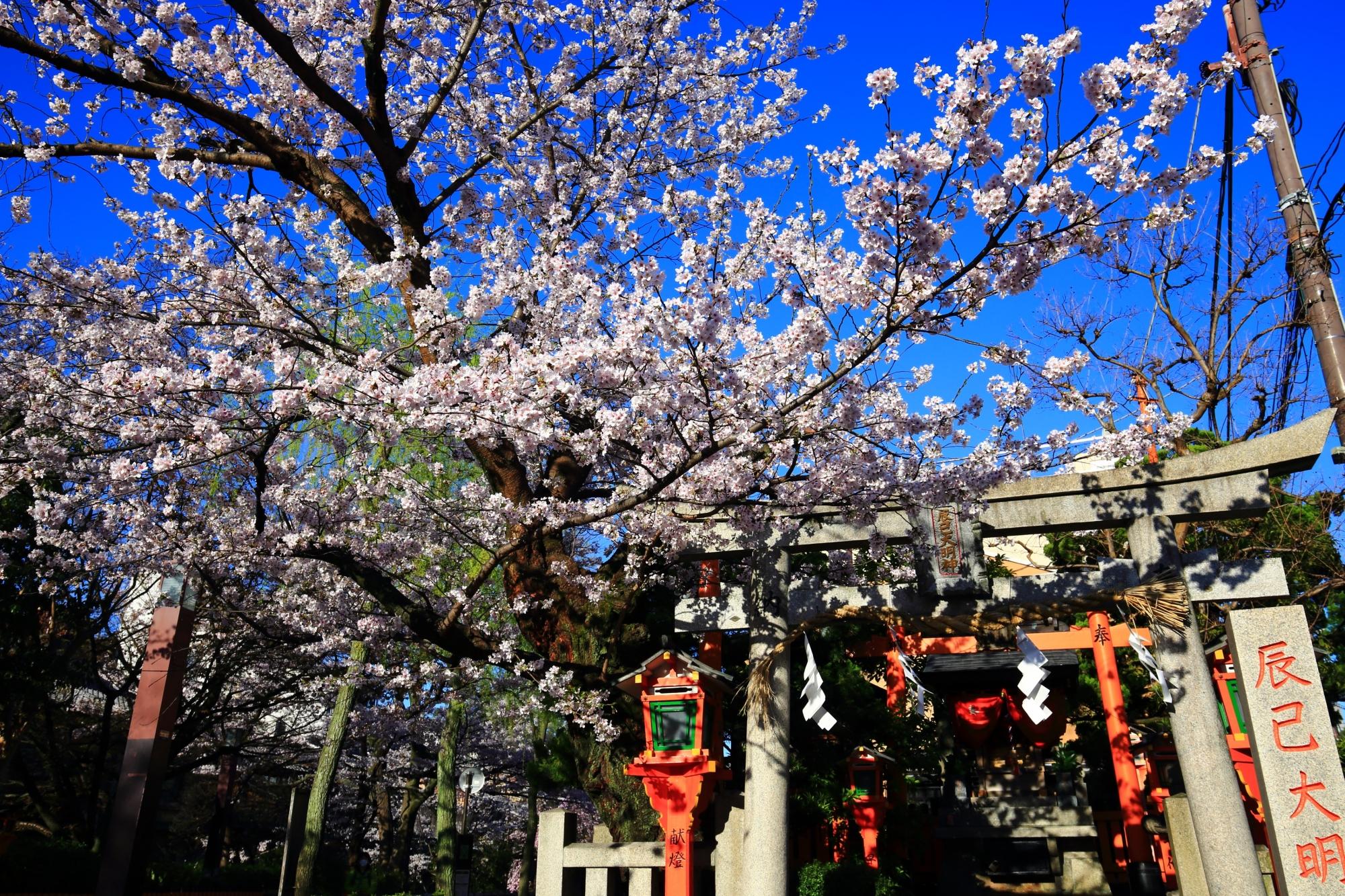 青空と辰巳大明神を彩る煌びやかな桜