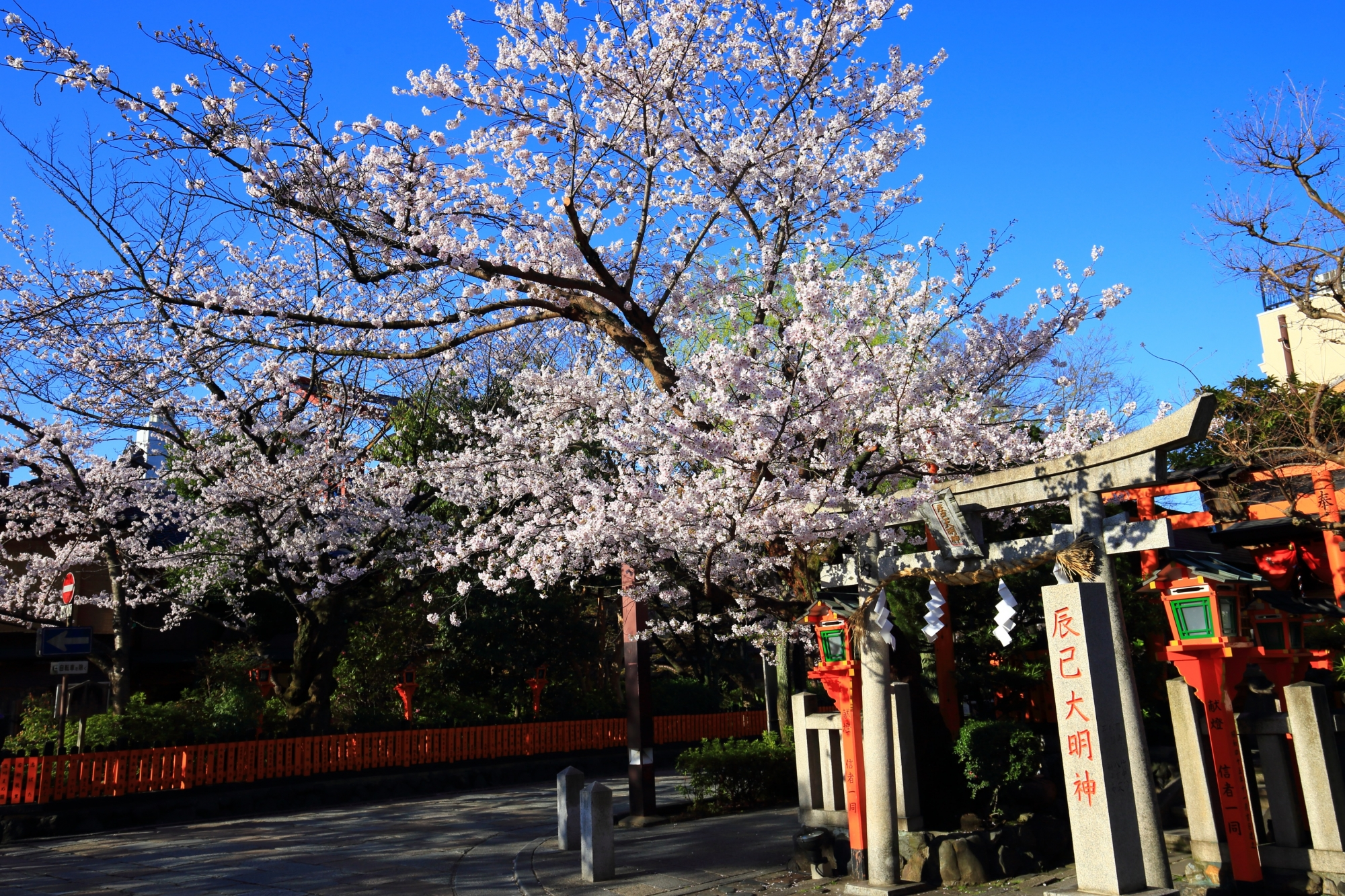 辰巳大明神と咲き誇る桜