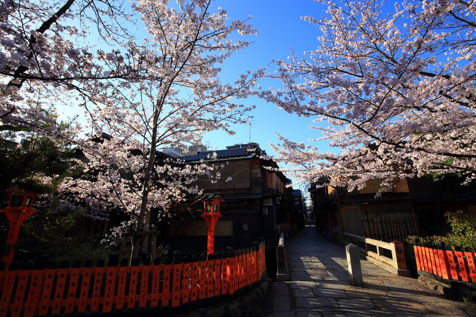 趣きある巽橋と青空を優雅に彩る桜