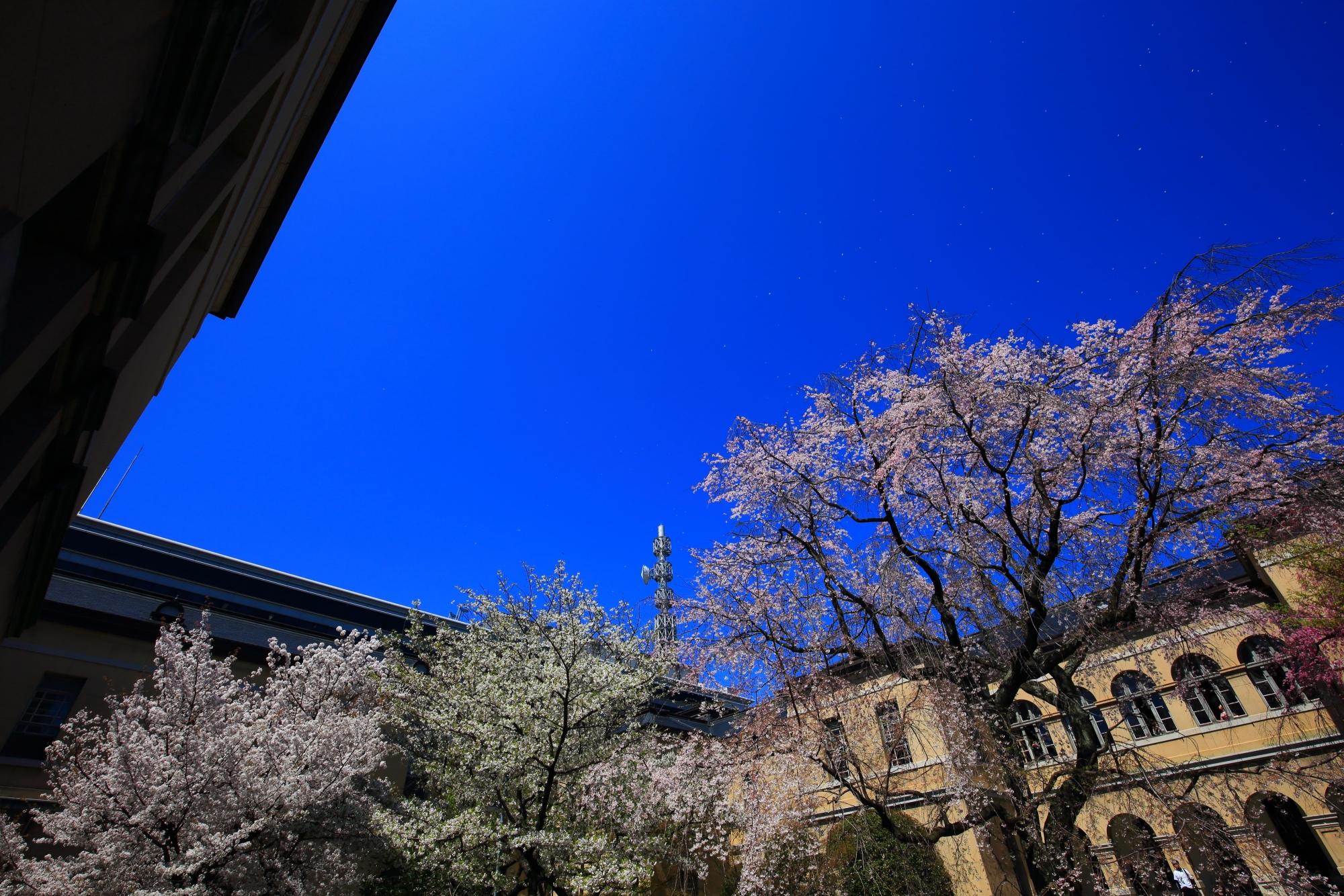 レトロな建物を背景にした色とりどりの桜