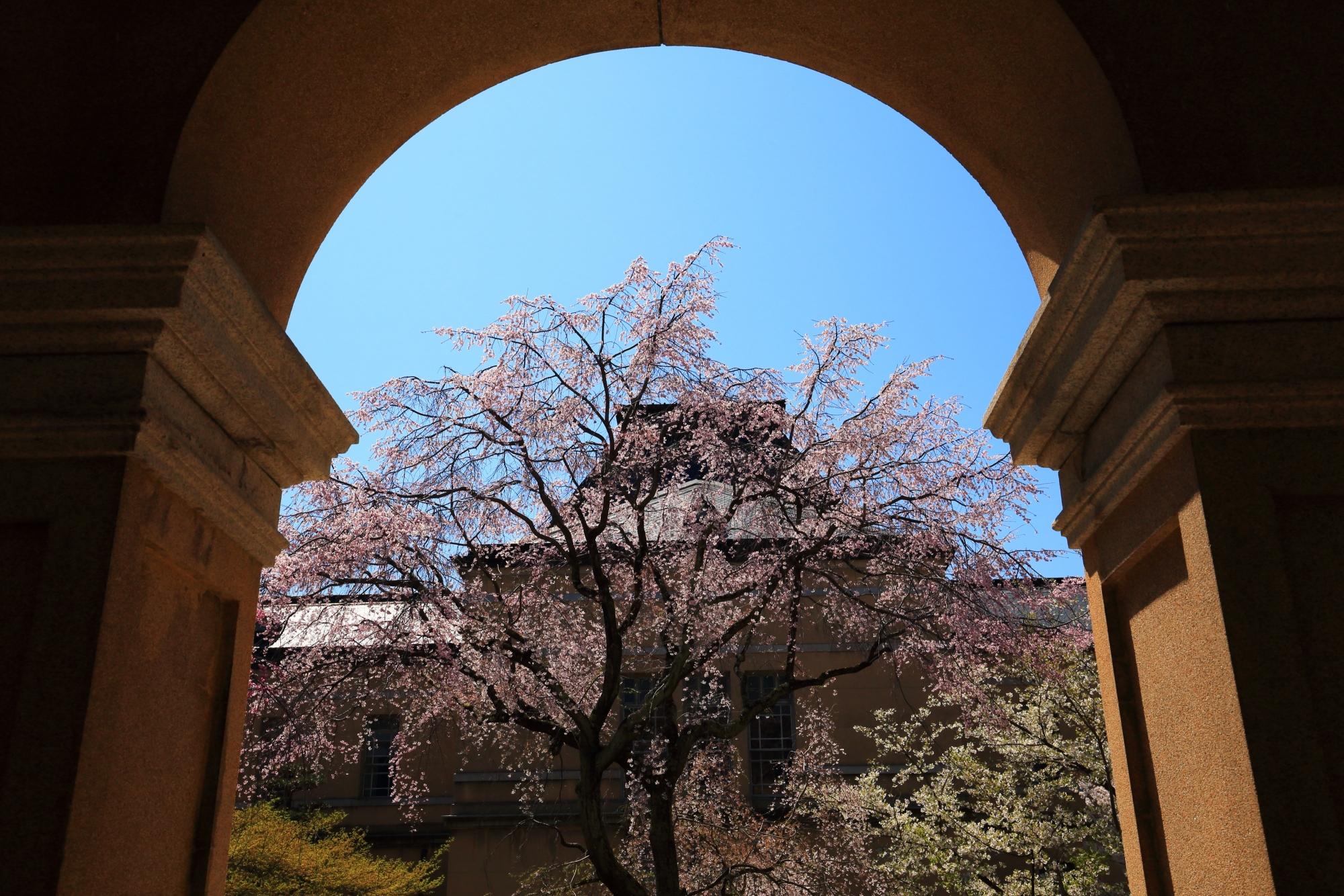 建物を枠にしたしだれ桜