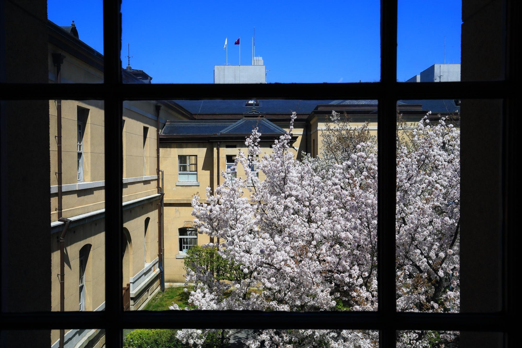 2階からの眺めた中庭の桜