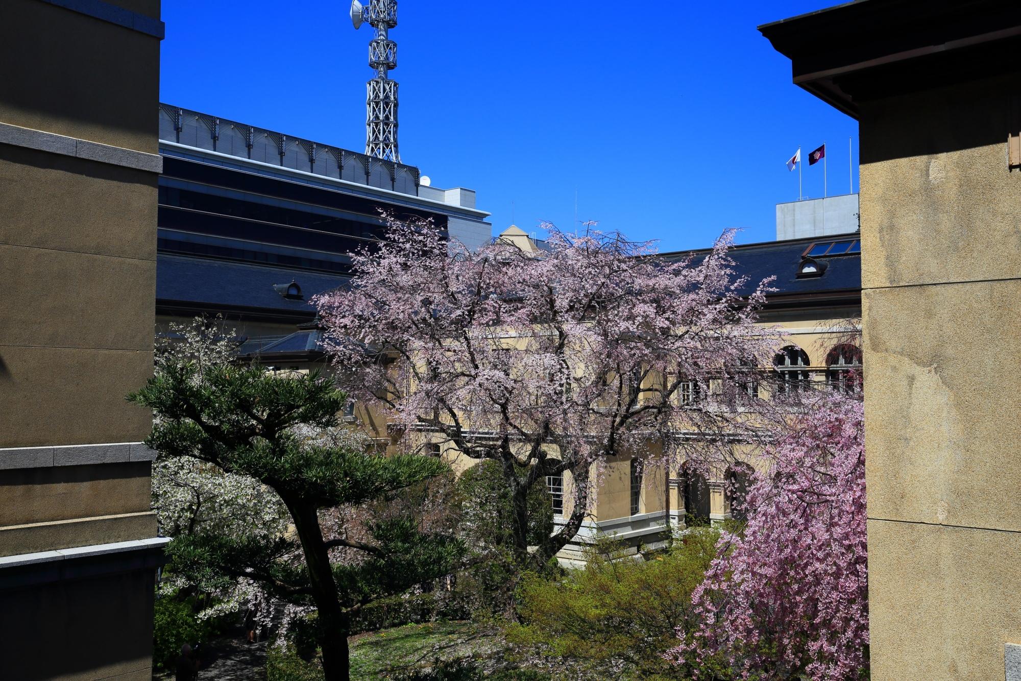 いろんな場所から眺められる多様な桜