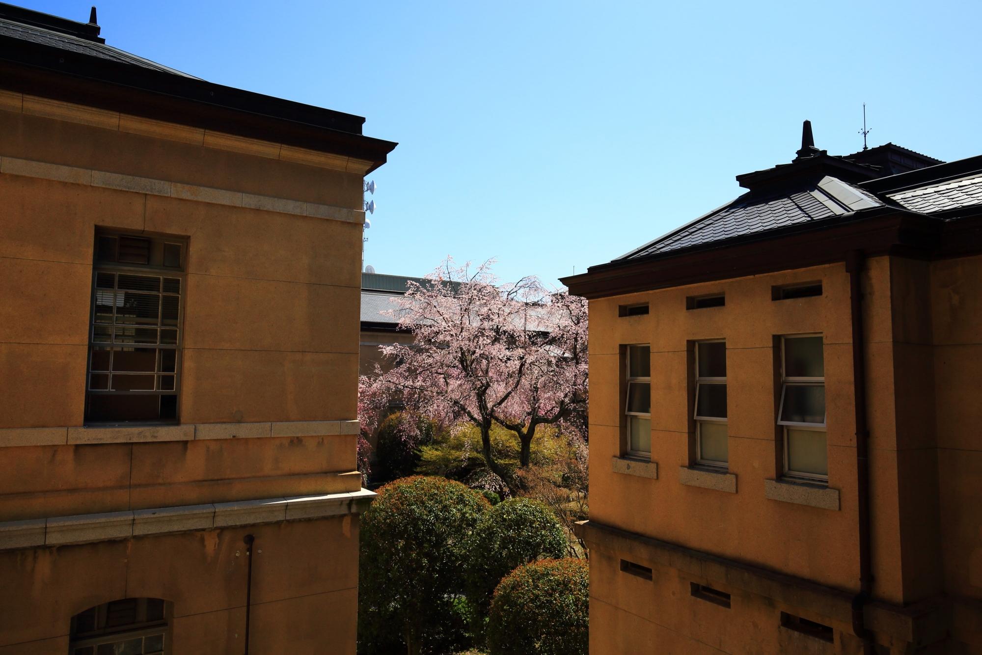 レトロな建物の隙間から見える華やかな桜