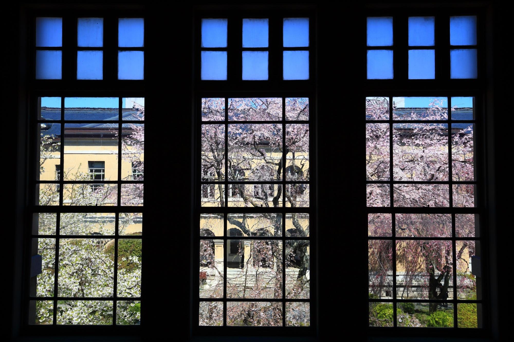 京都府庁旧本館の素晴らしい桜と青空と春の情景