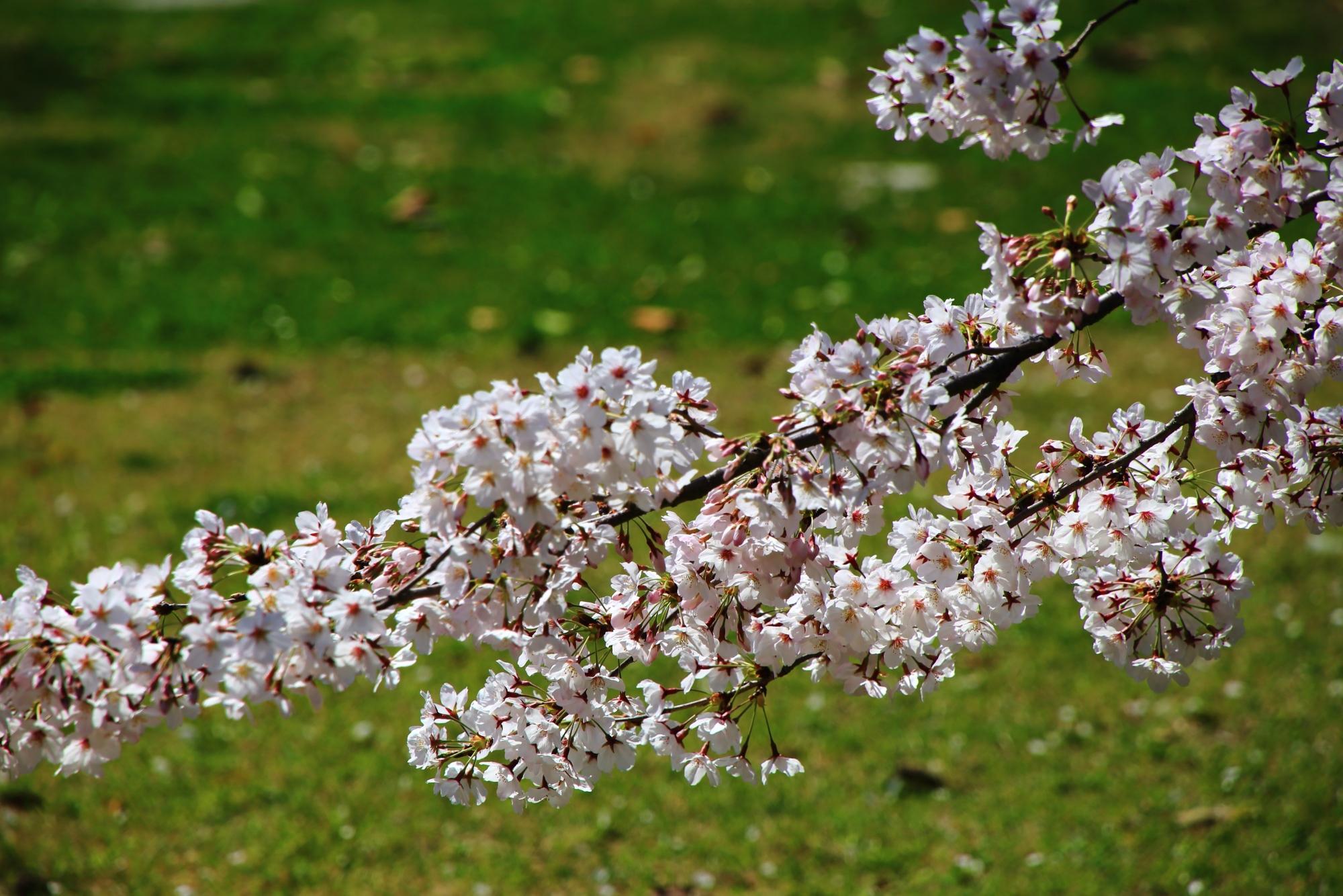 緑の芝生を背景にした彩り豊かな春の情景