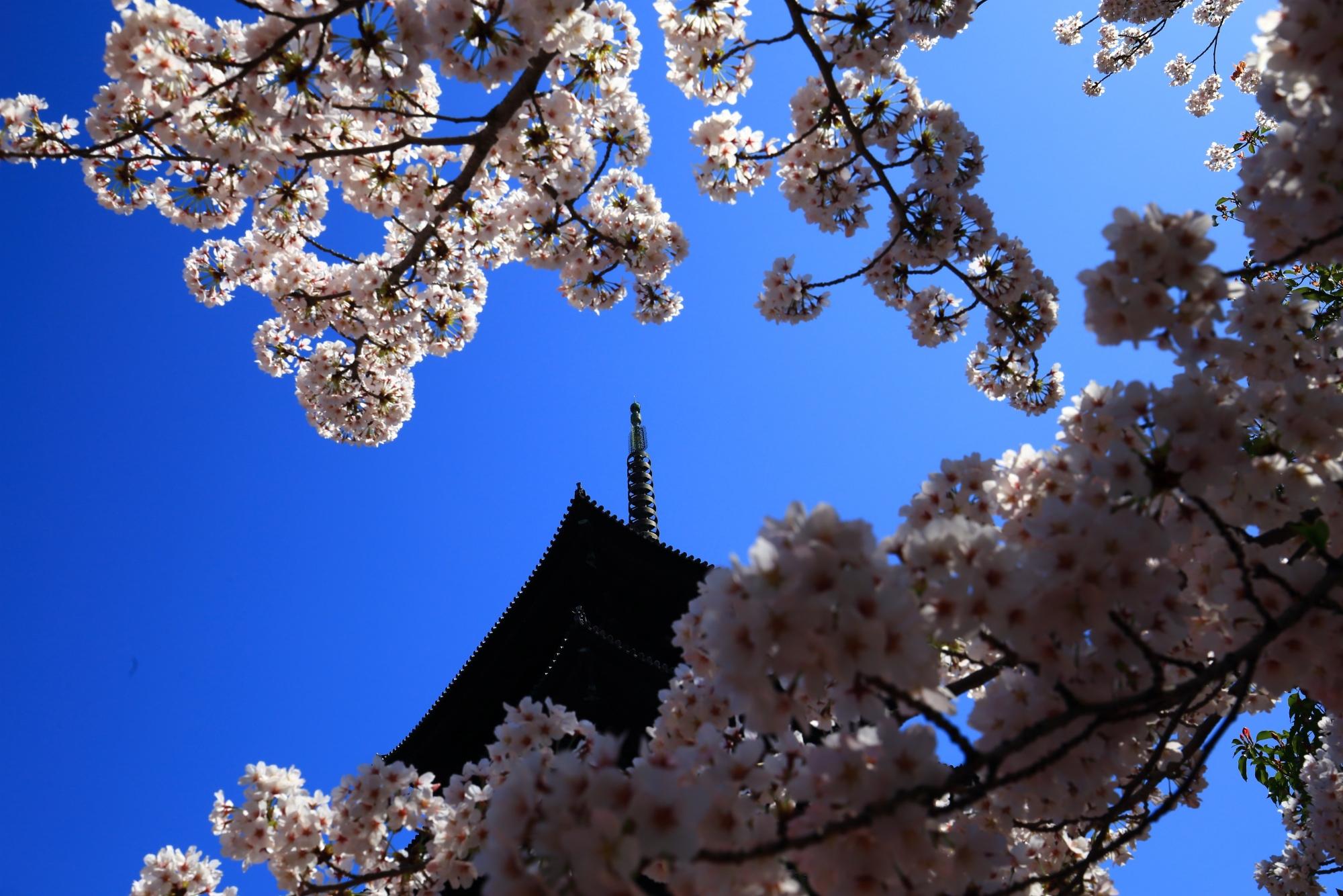 賑やかな春色に包まれた五重塔