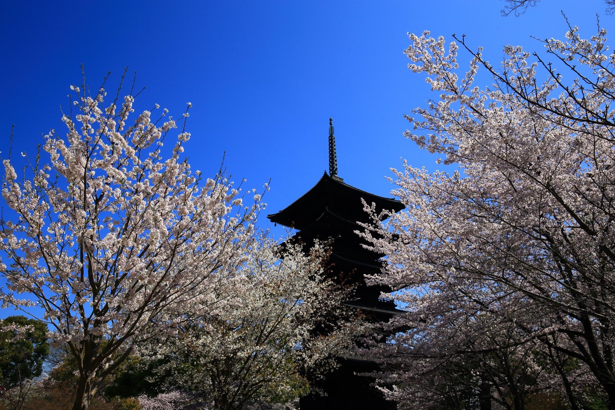 五重塔をそめる絵になる桜の風景