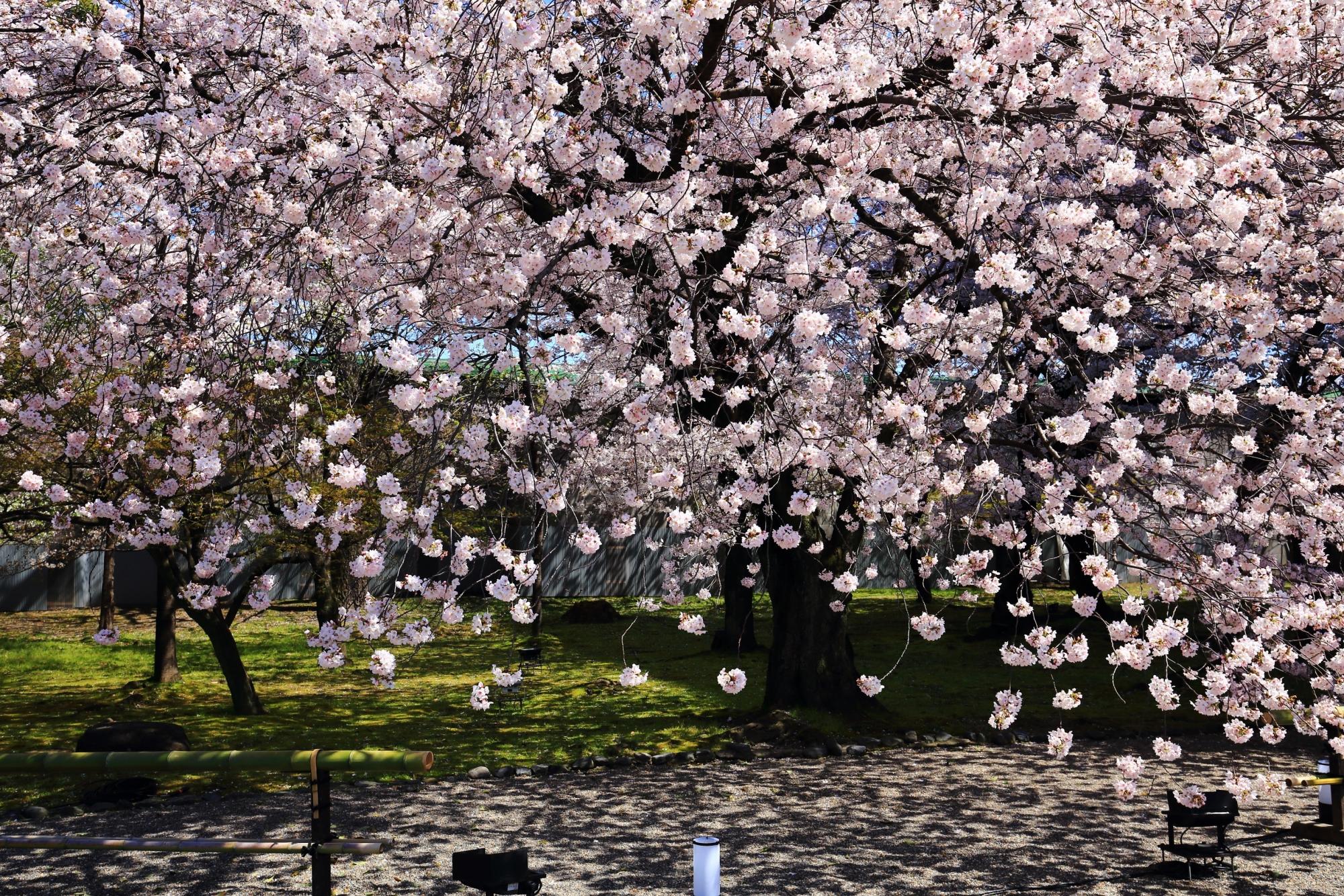 春の楽しい雰囲気につつまれる境内全体