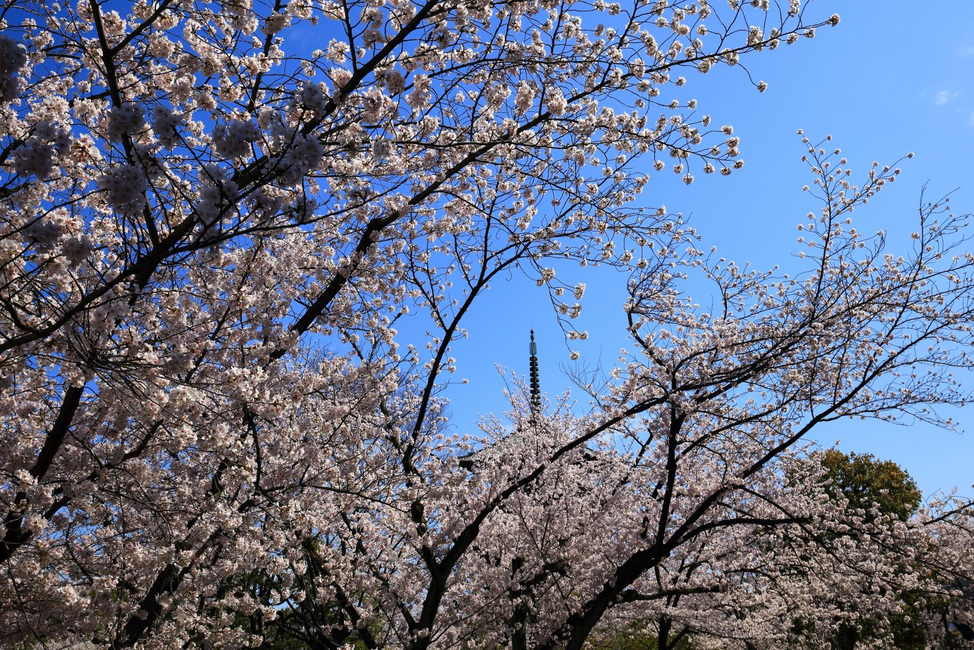 華やかな桜の空間