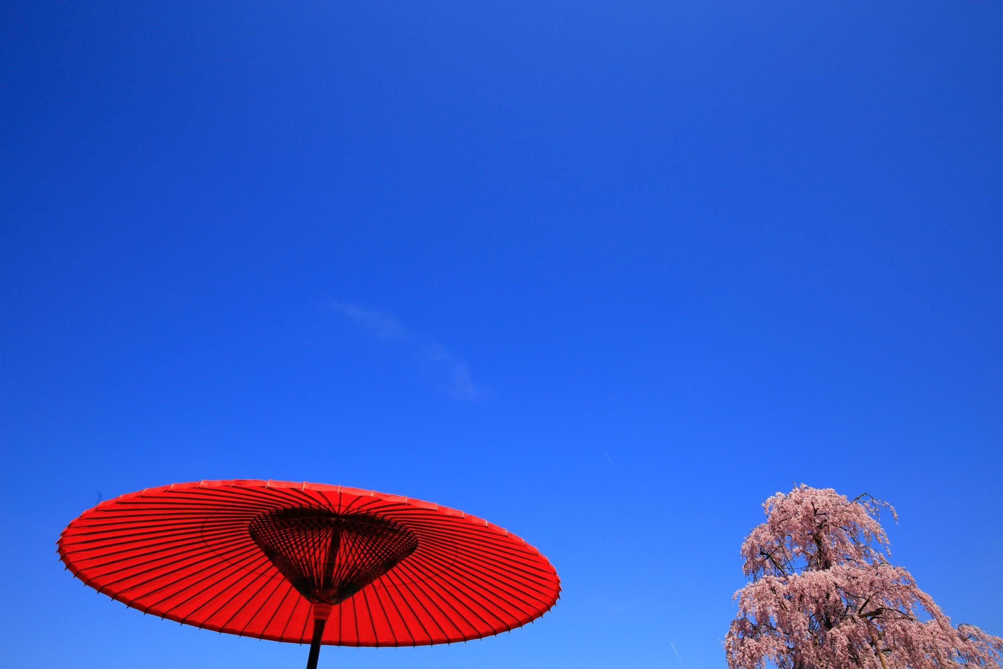 青空に映える和傘の赤と桜のピンク