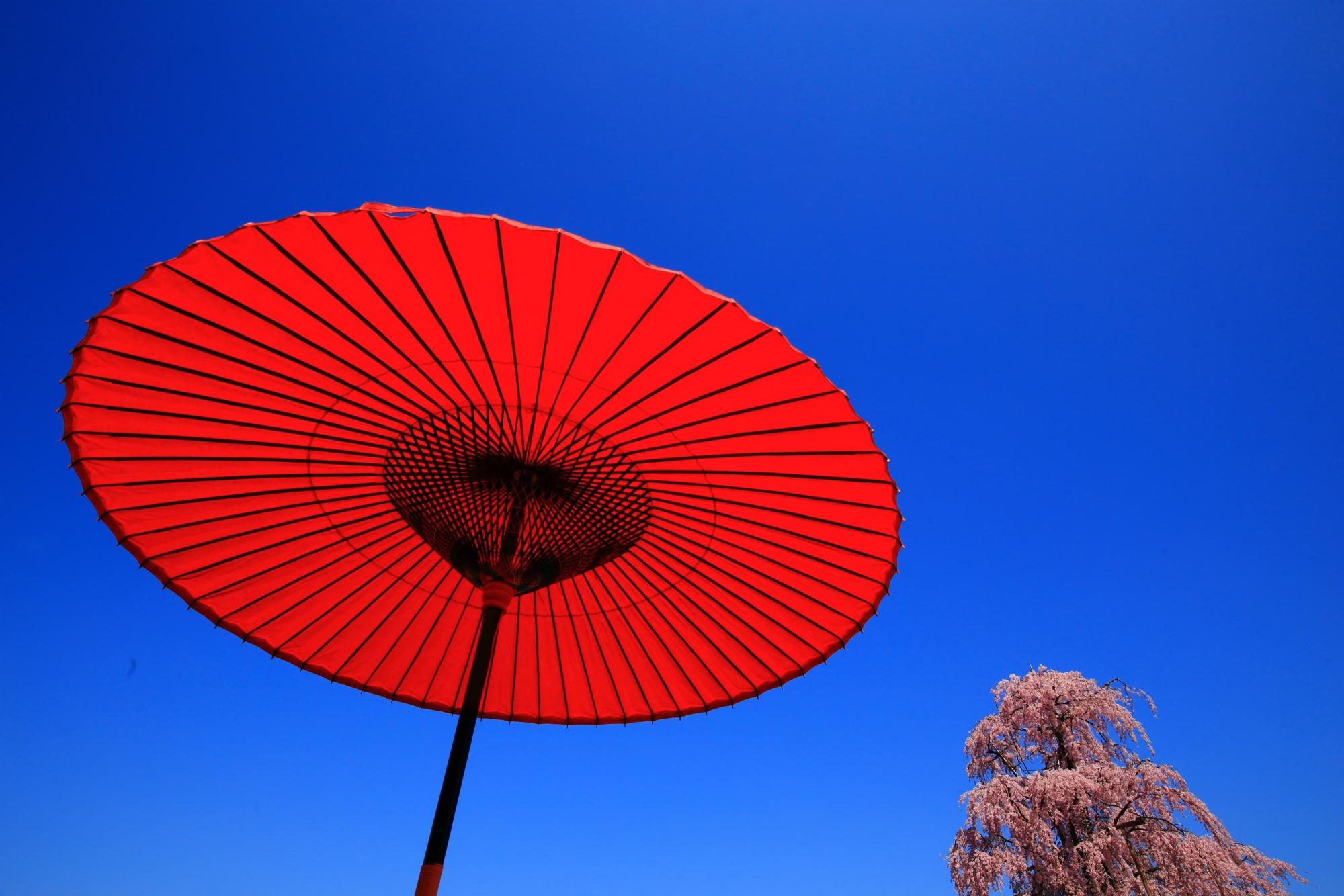 不二桜と赤い和傘