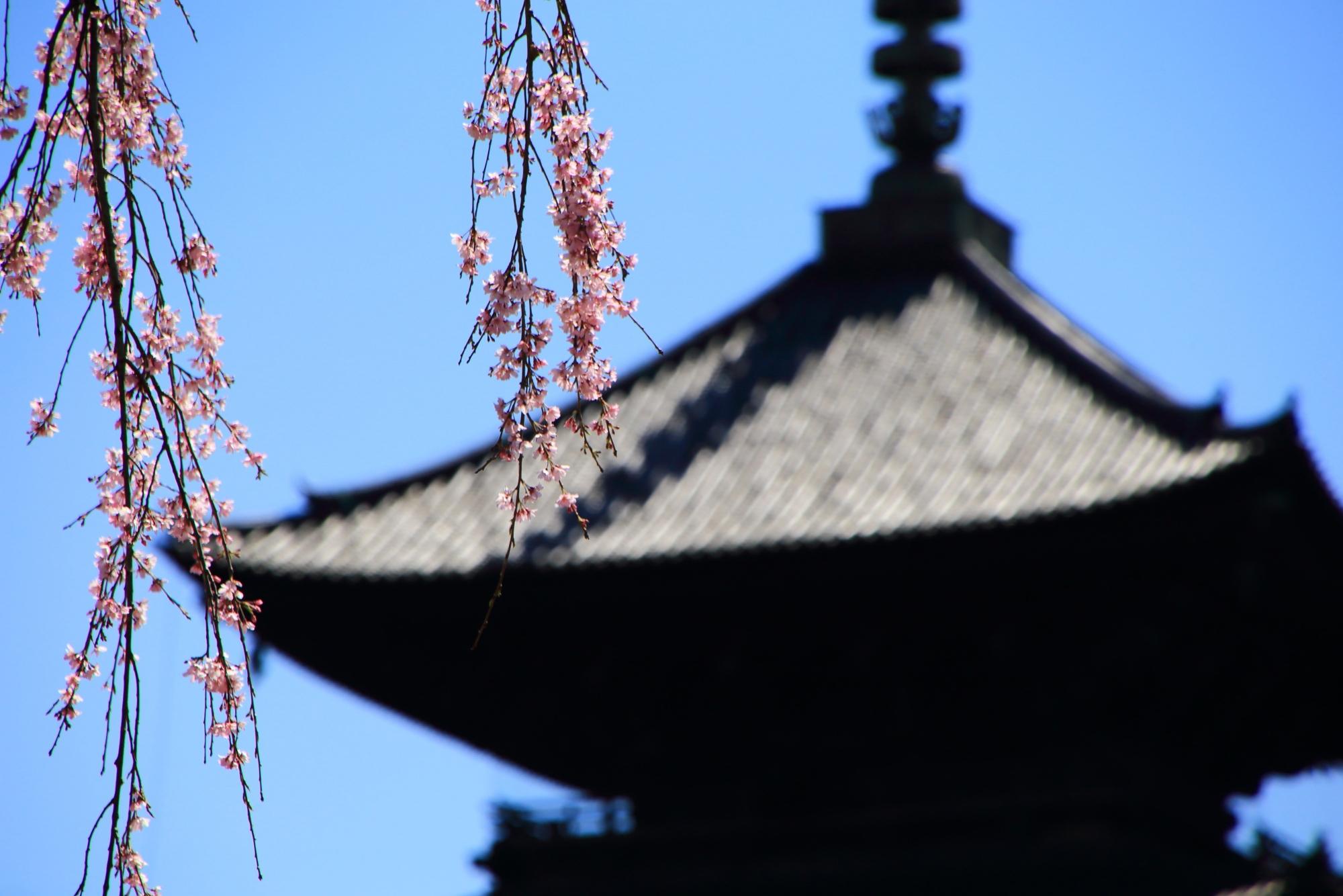 しなやかに揺らぐ枝と花