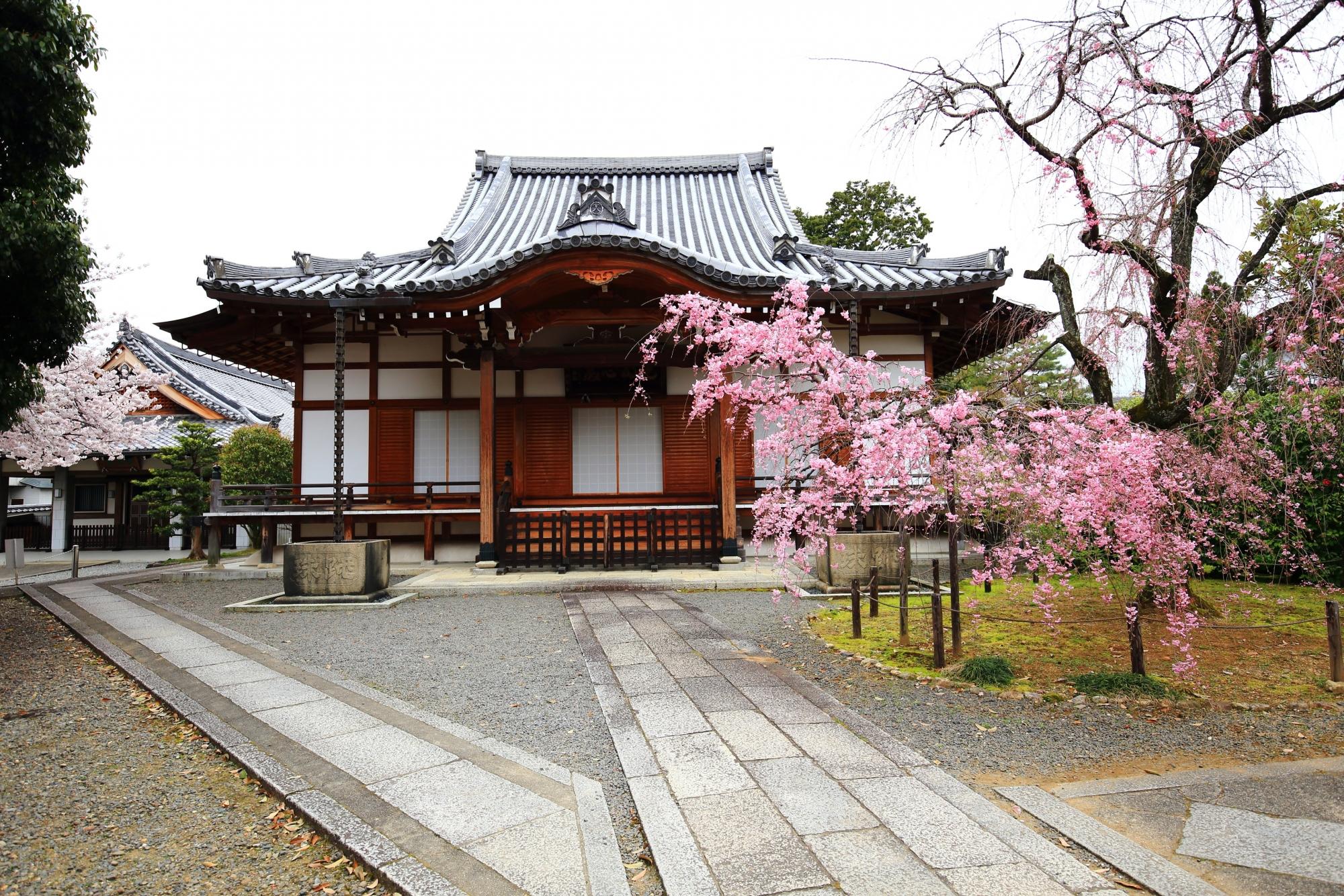 上品蓮台寺のお堂と鮮やかなしだれ桜