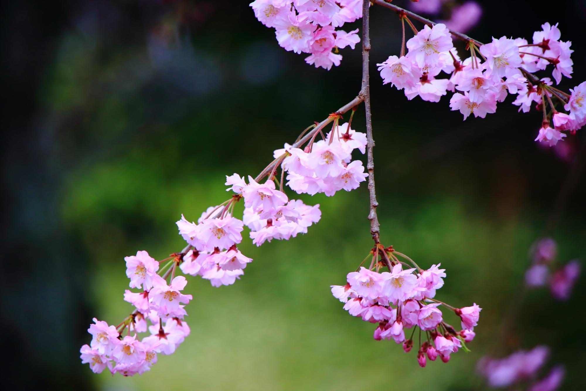 いろんな方向に伸びる花をつけた枝