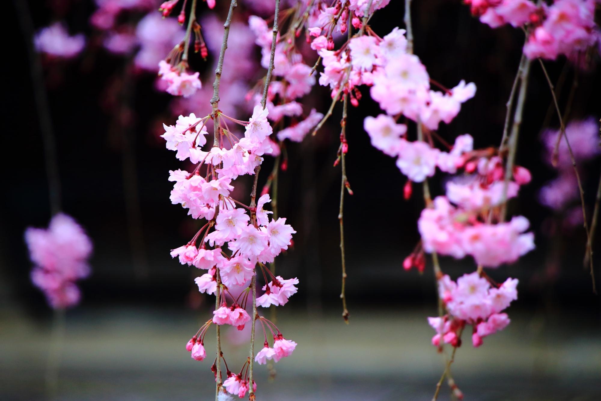 華やかさの中にも風情が感じられる桜