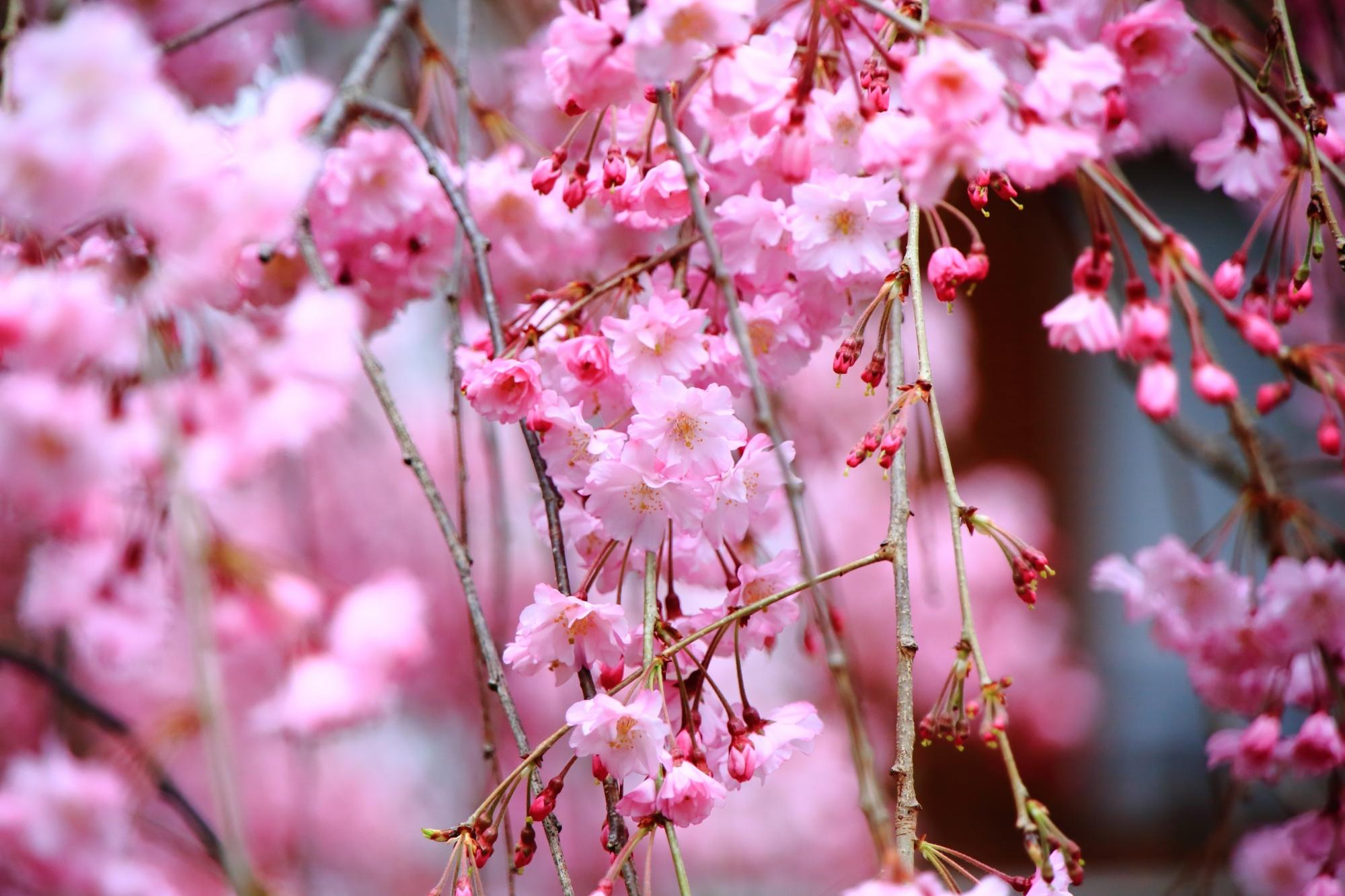 賑わうピンクの花