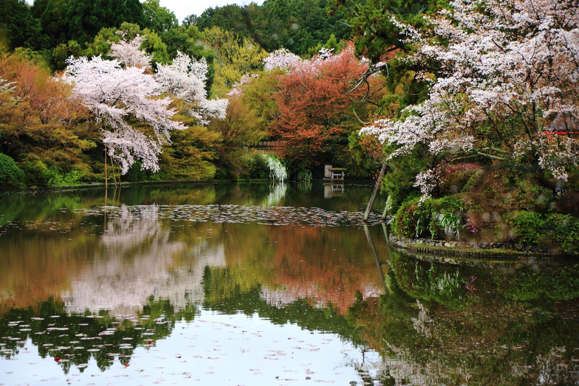 水辺を彩るしっとりとした桜と綺麗な水鏡