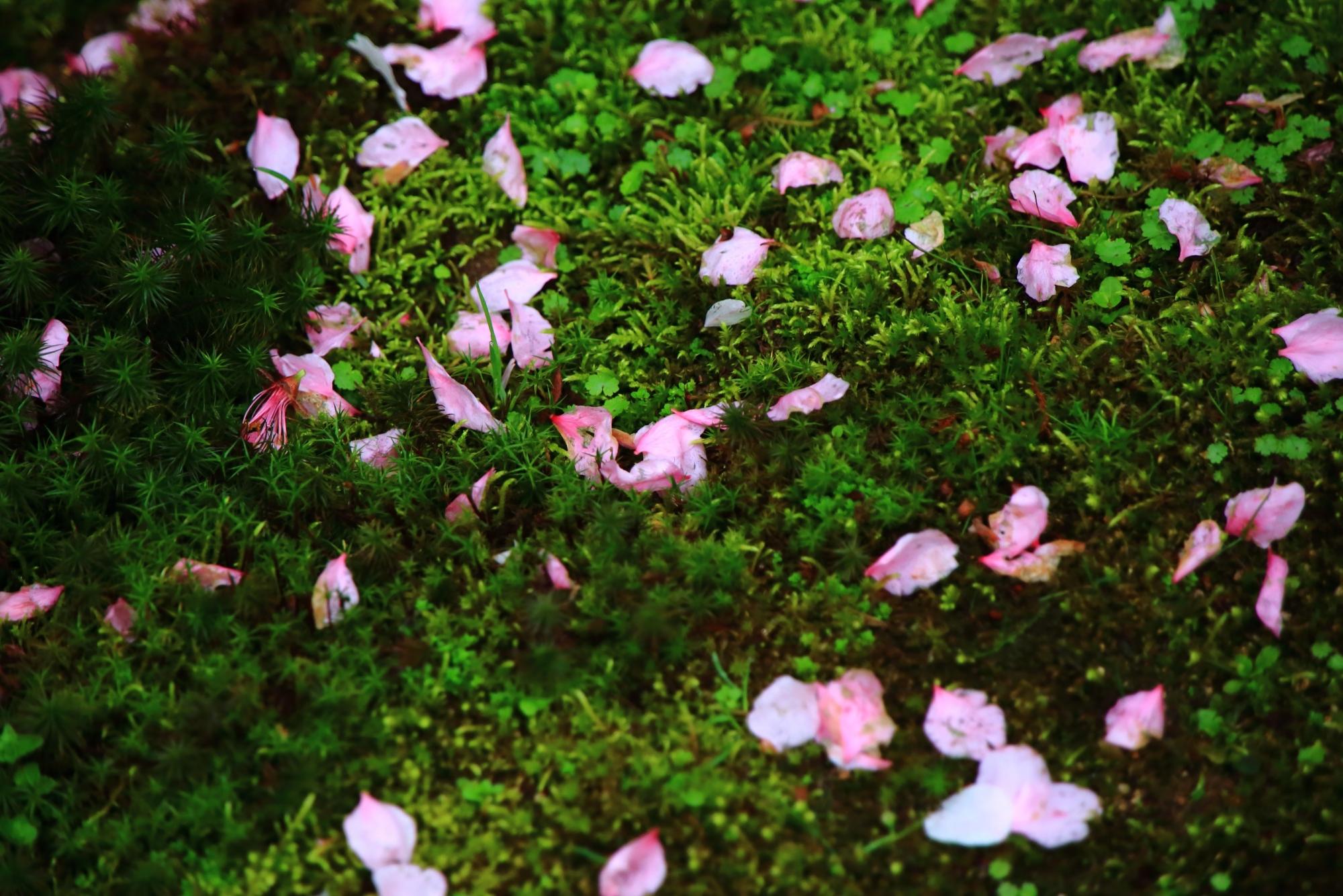 様々な散り方をする散り桜
