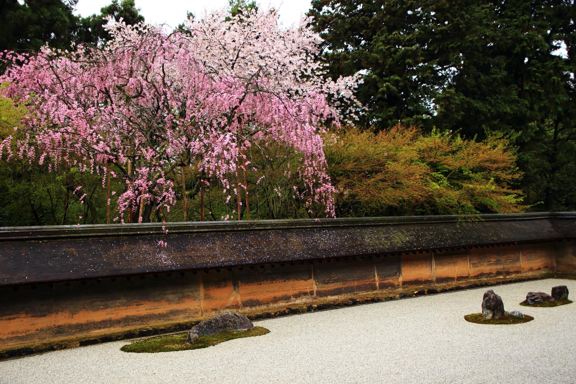 深みのある色合いの風情ある春の石庭