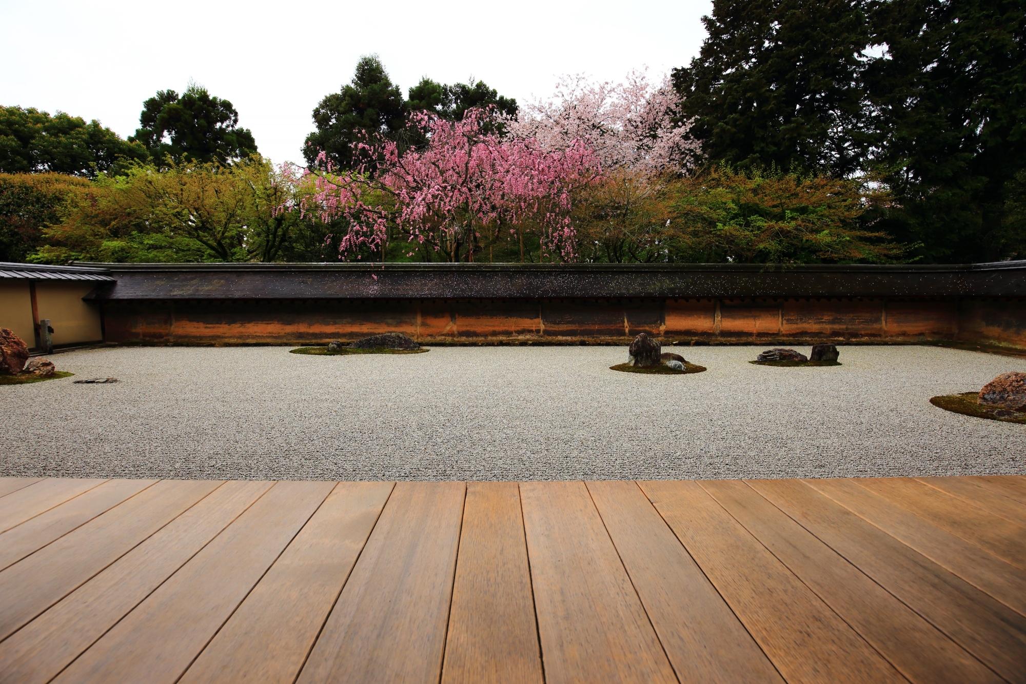 龍安寺の素晴らしい雨の桜と春色の風景