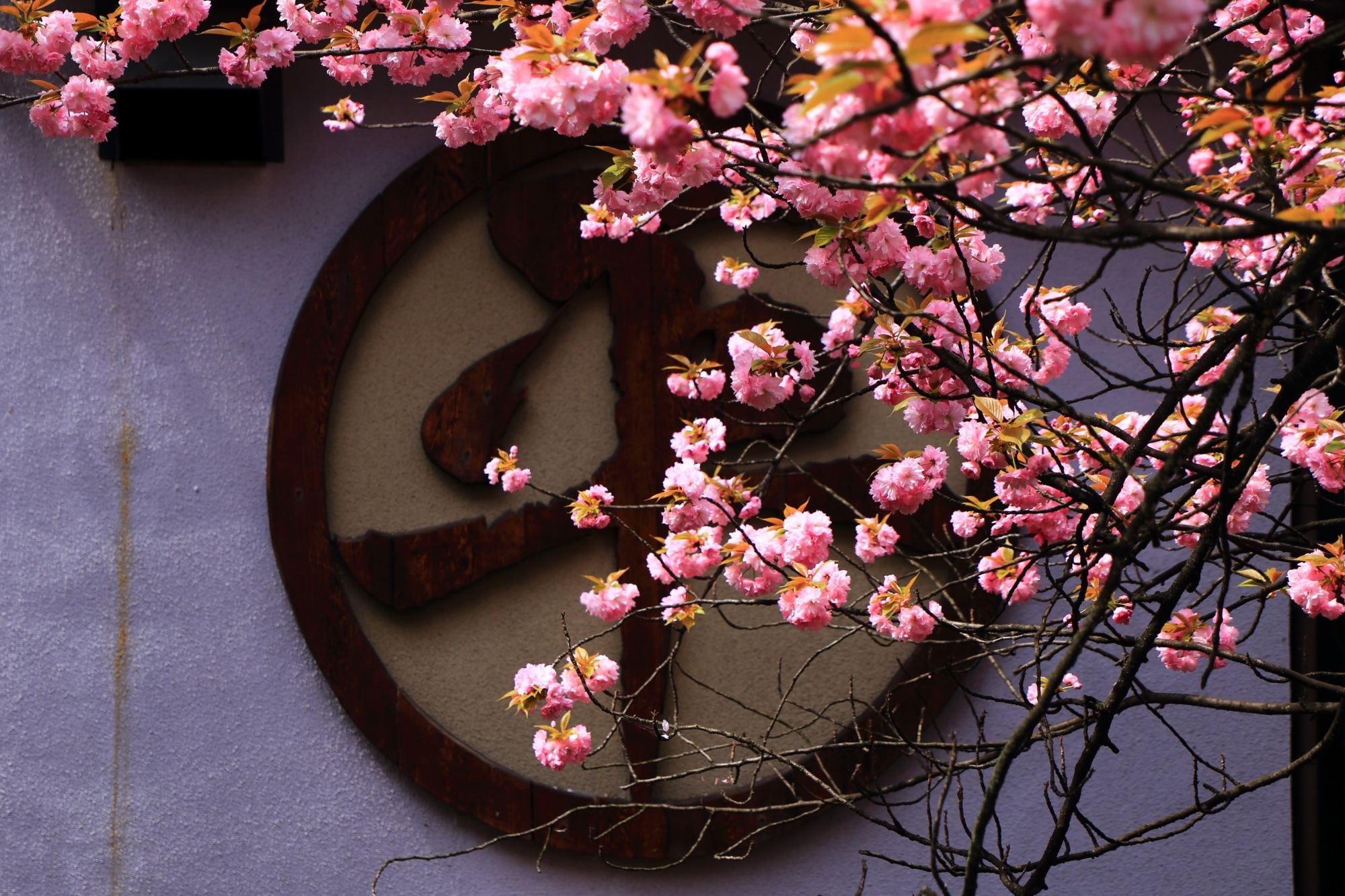 平吉さんの「平」の字を彩るピンクの八重桜