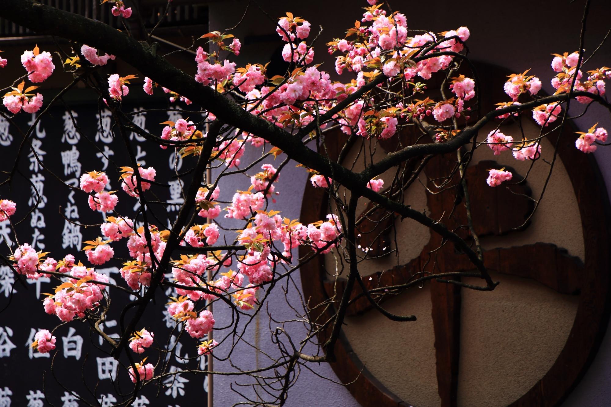 背景と相まって風情ある桜に見える里桜