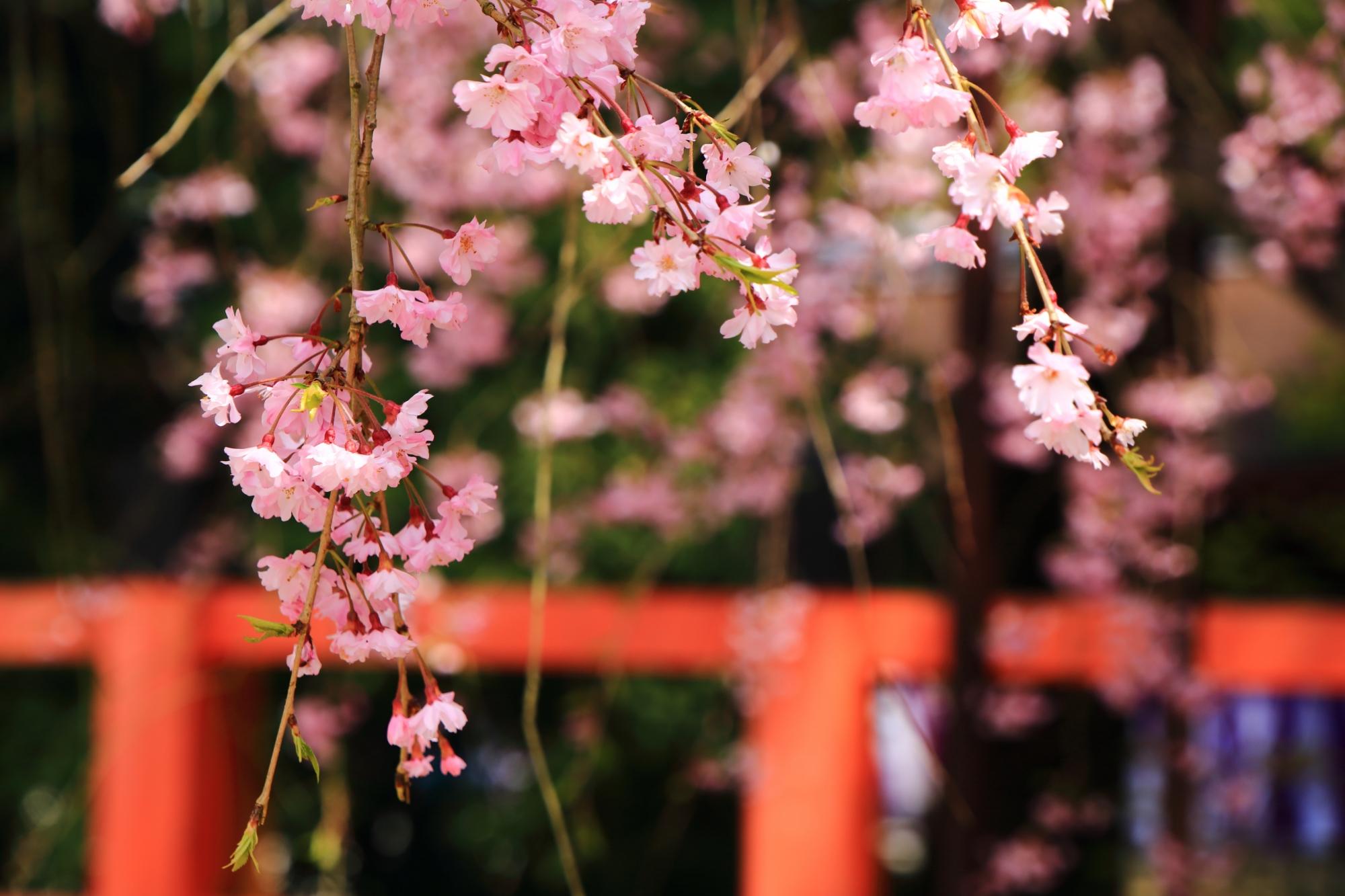 しなやかに風に揺らぐピンクの花