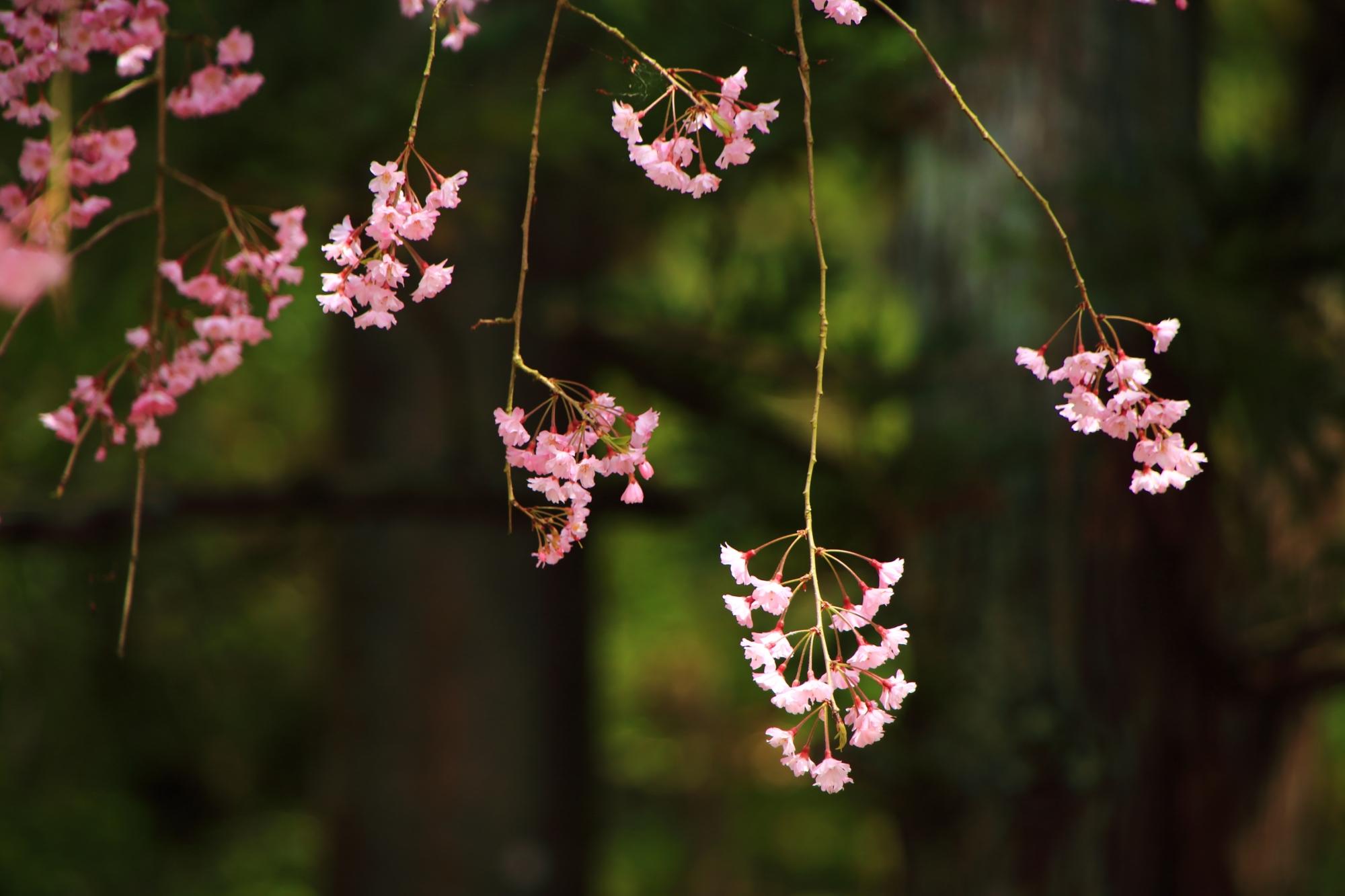 繊細で可憐な花