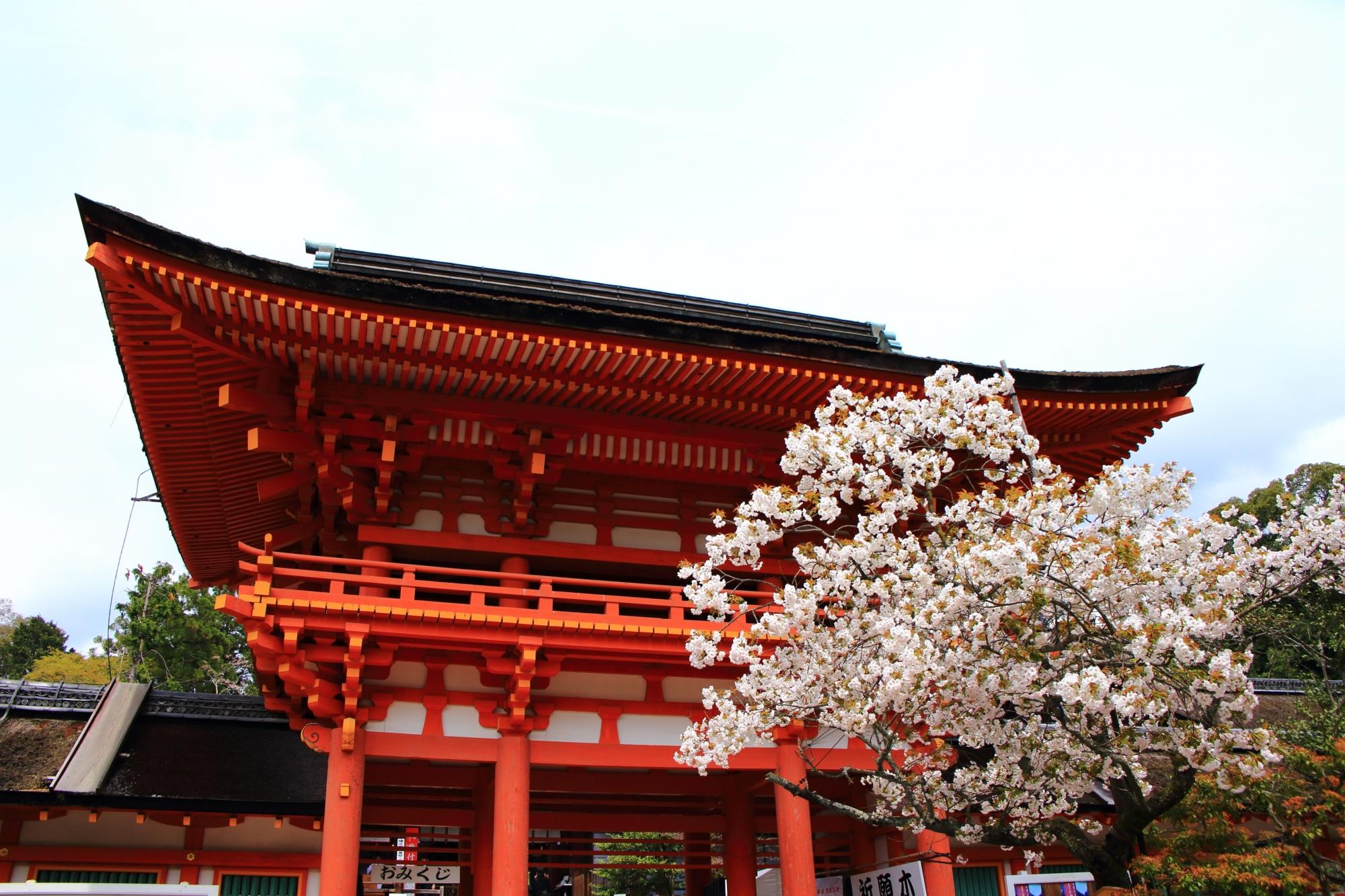 賀茂桜と楼門