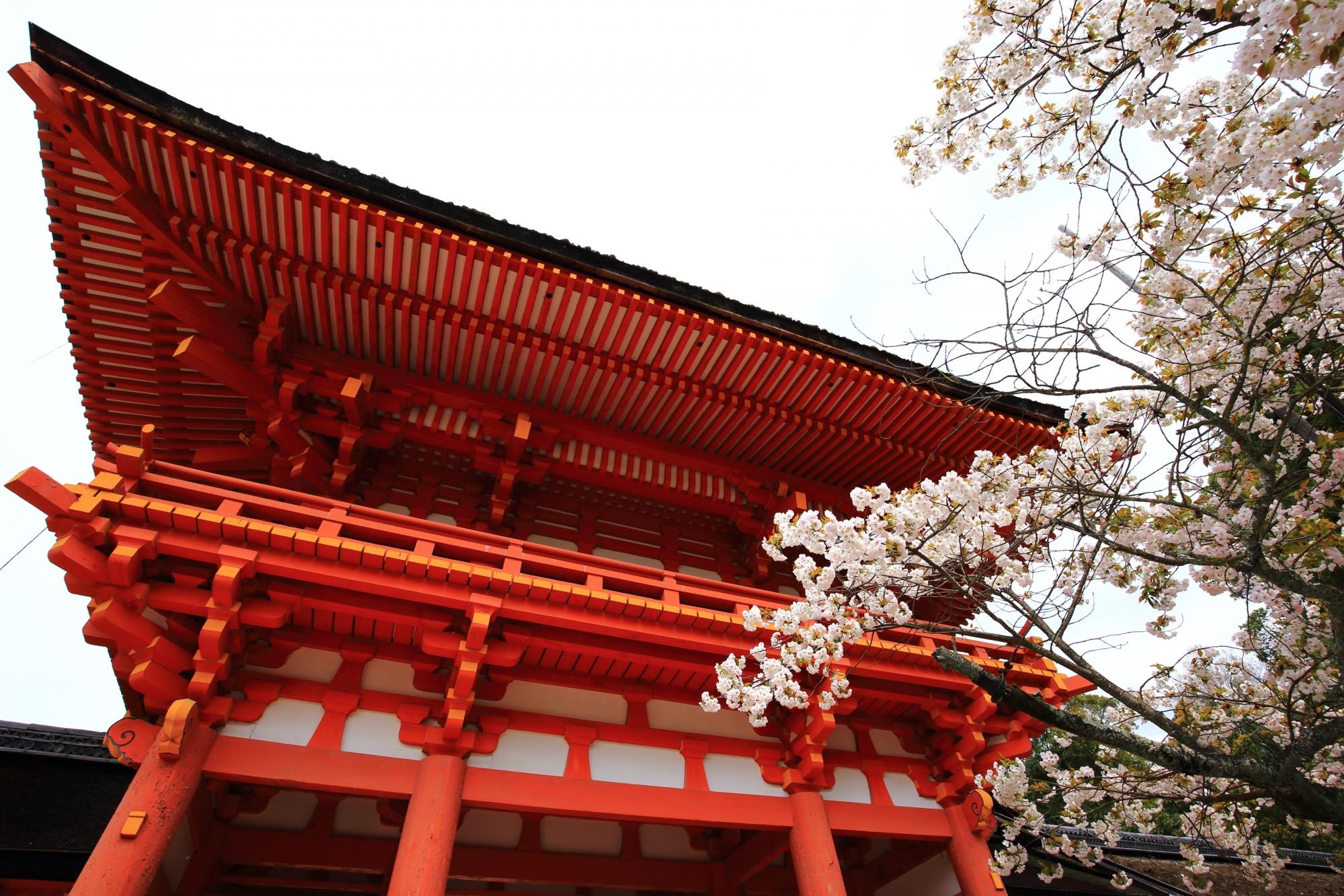 赤い楼門に映える白い賀茂桜