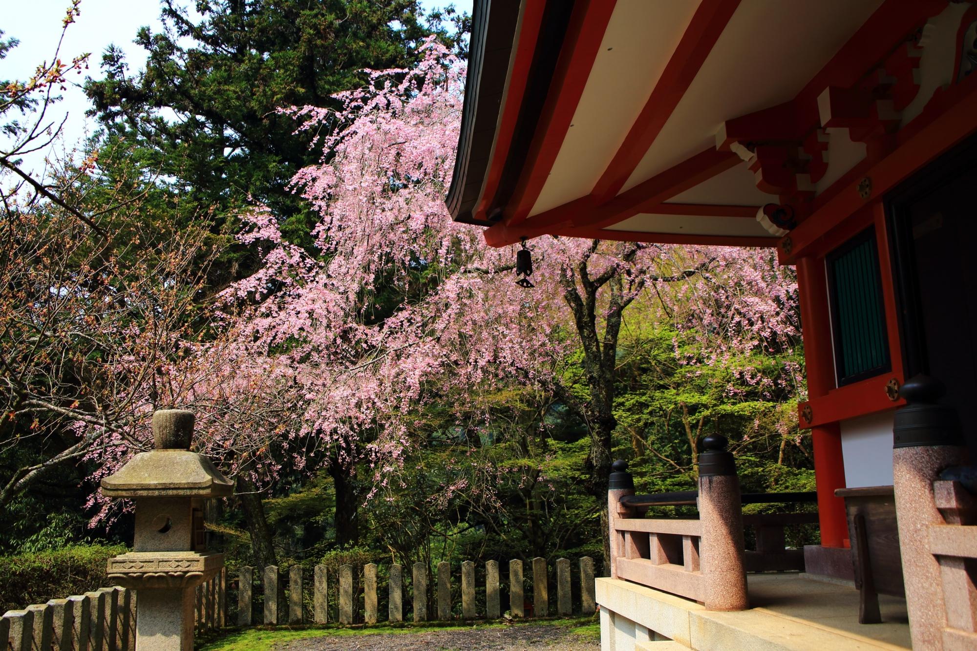 多宝塔の屋根の庇の下から見える風情あるしだれ桜