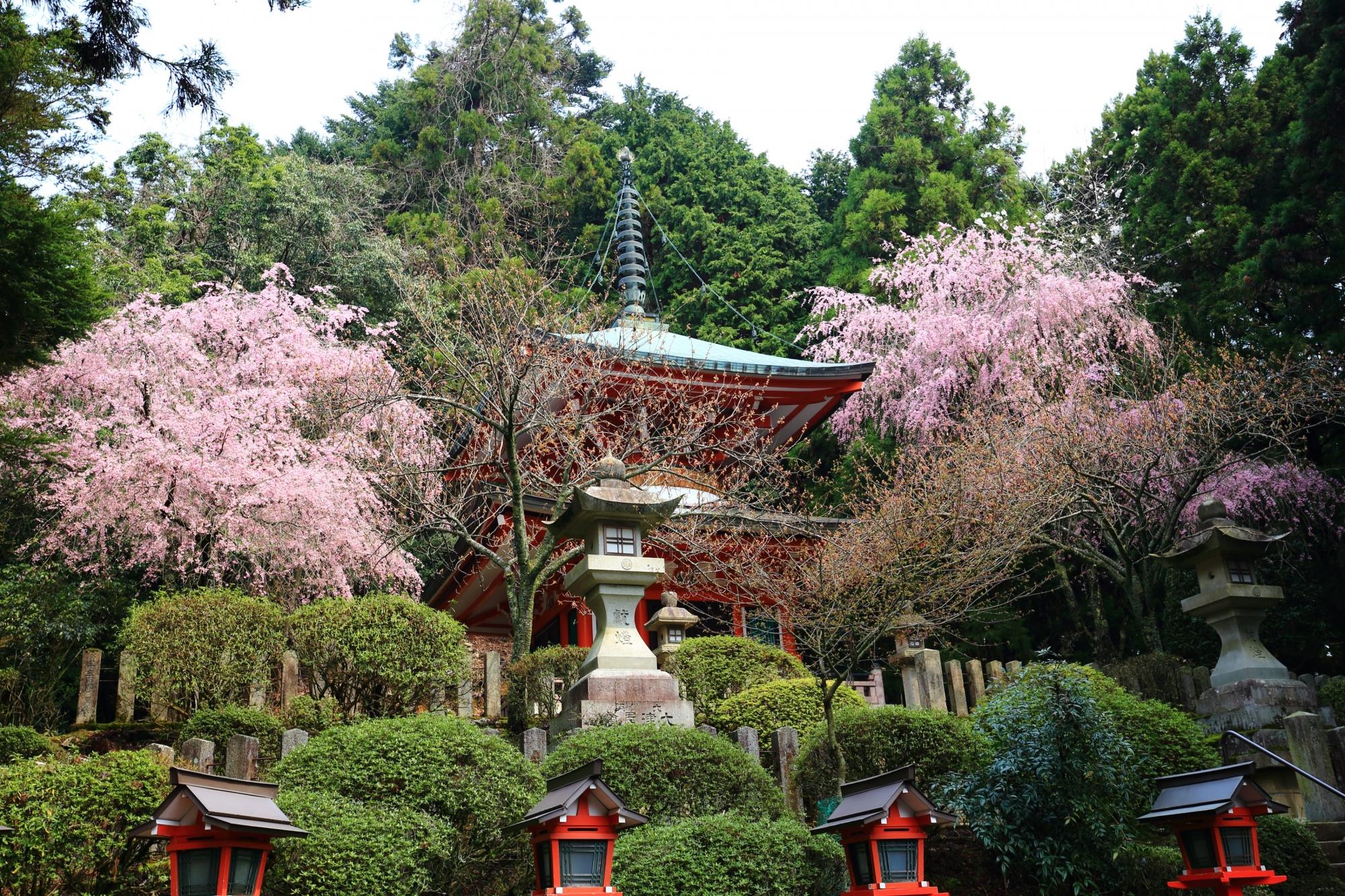 鞍馬寺の多宝塔としだれ桜