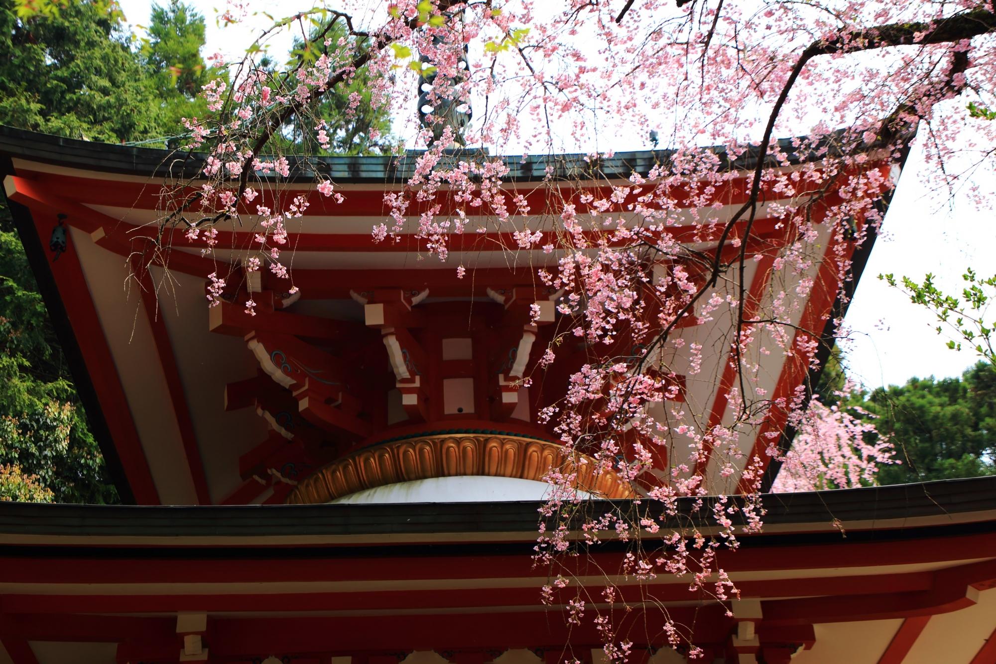 朱色と白の多宝塔を華やかに染めるピンクのしだれ桜
