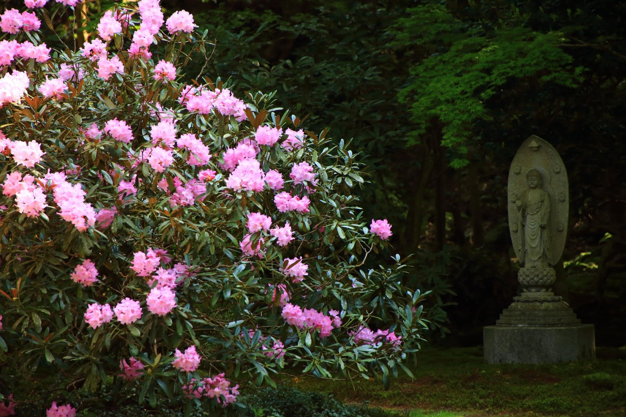 観音様と華やかな石楠花